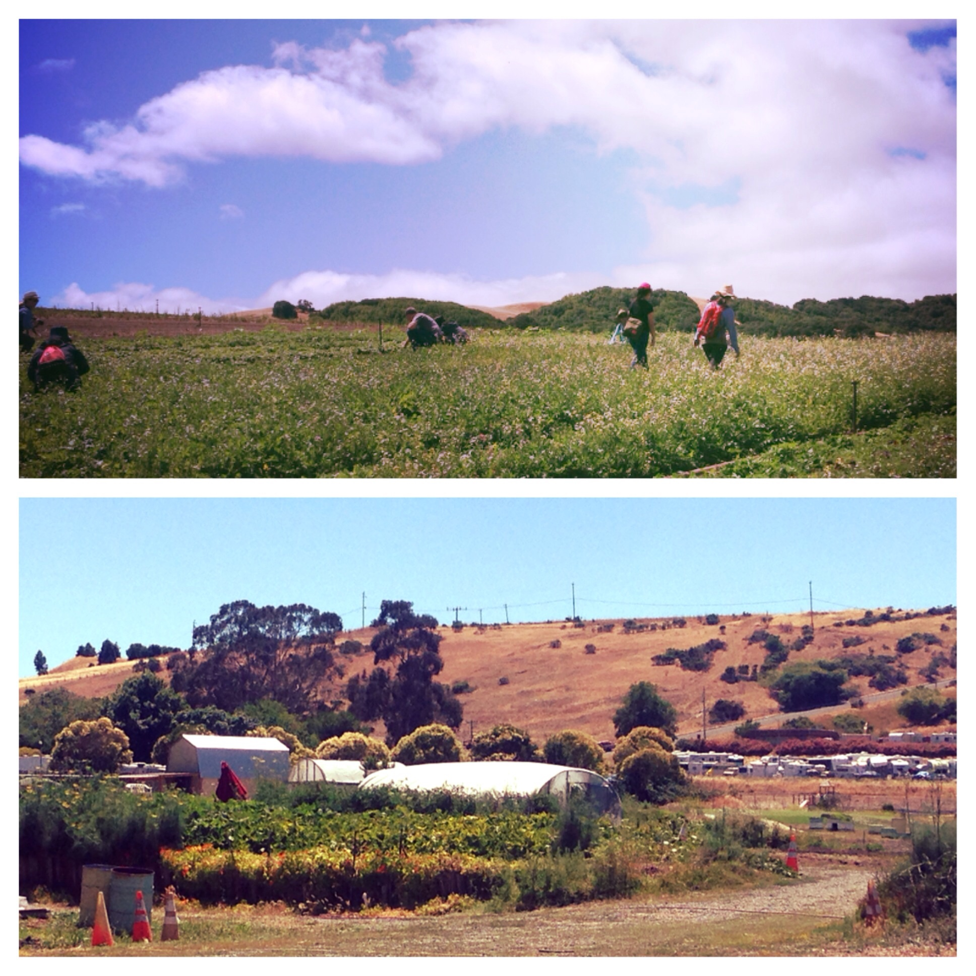Tranquil scenes of the fields at Marin Roots (above) and some of the honey operation at Marshall's Farm.