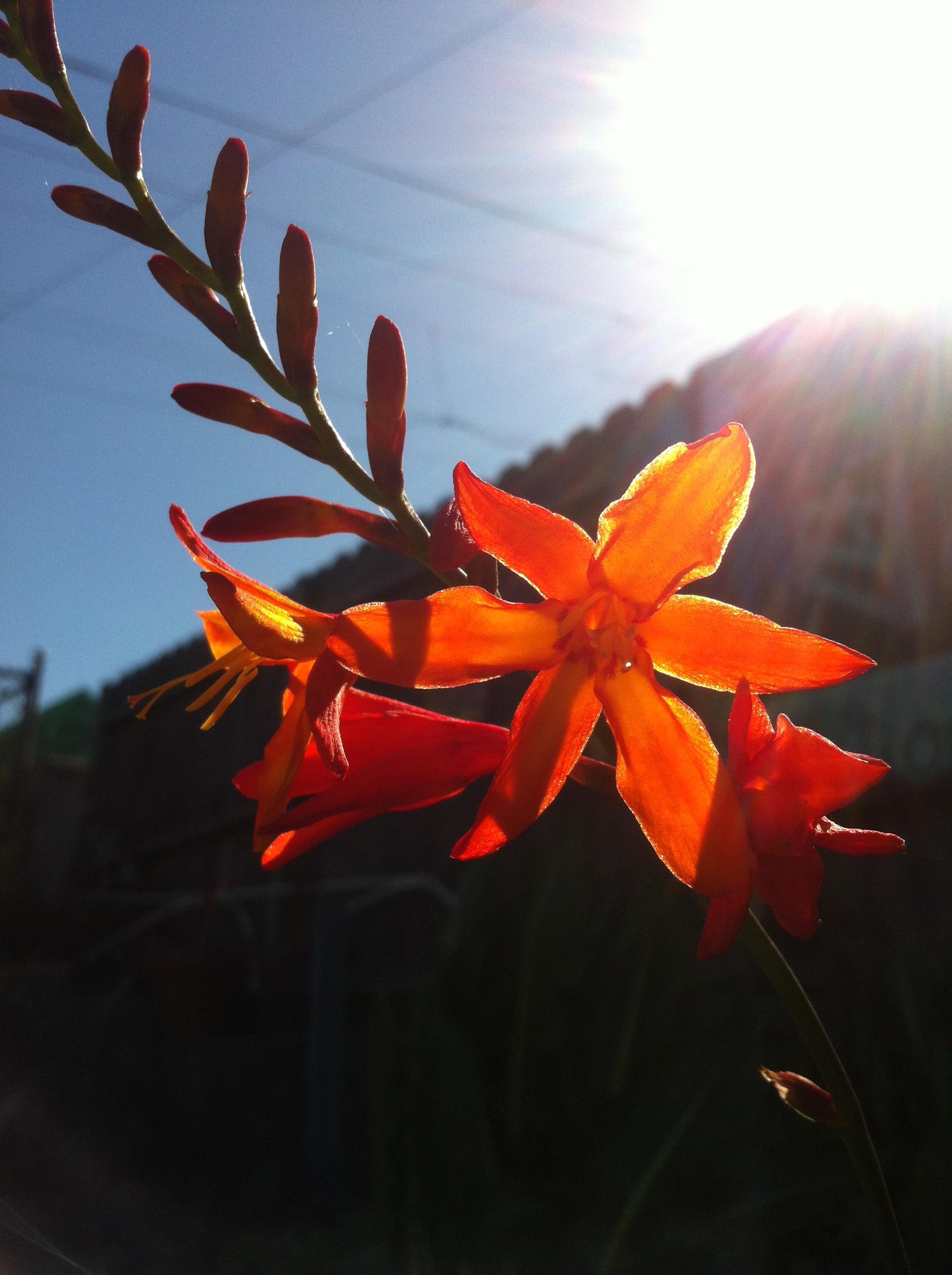 S4D3 2015 orange flowers.jpg