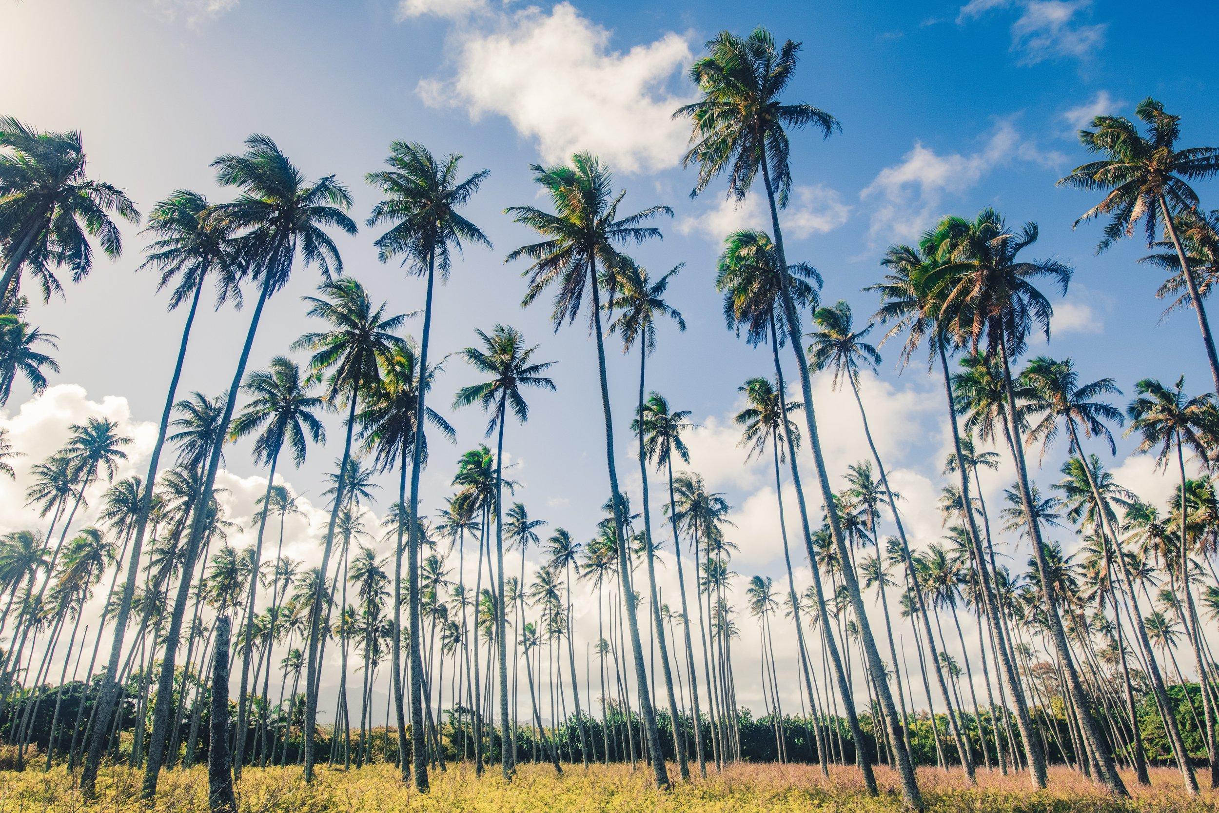 kauai palm 2.jpg