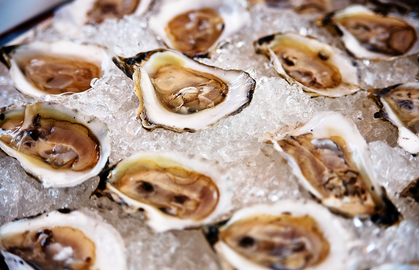 oysters_on_ice_16x20.jpg