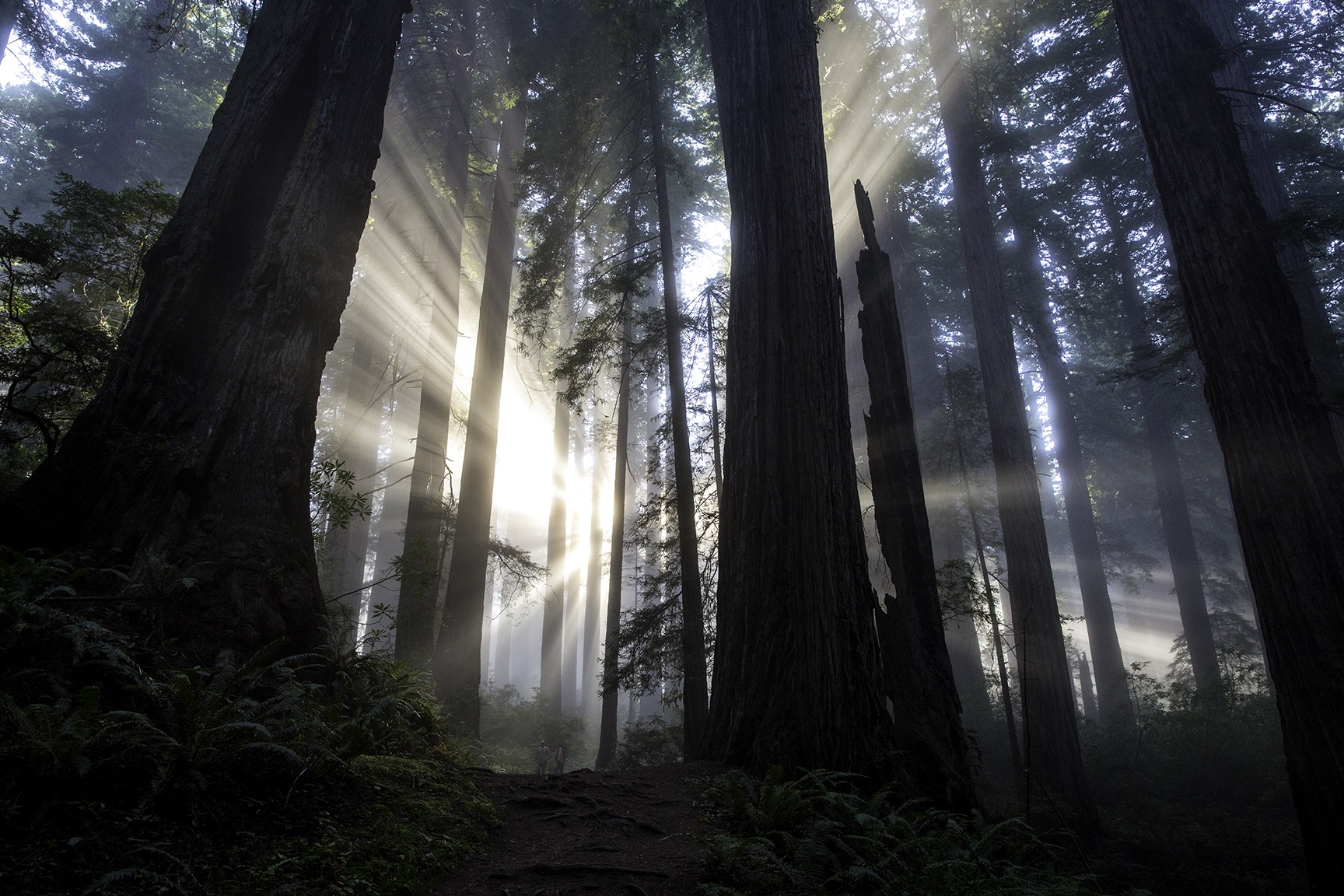 godlight.jpg