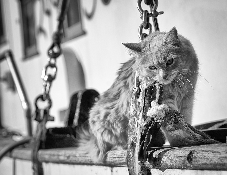 cat on boat.jpg