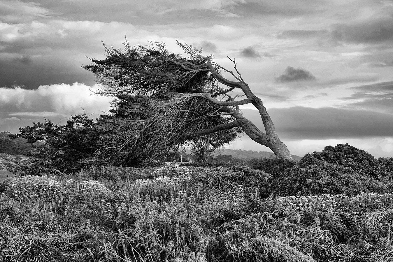 cypress copy.jpg