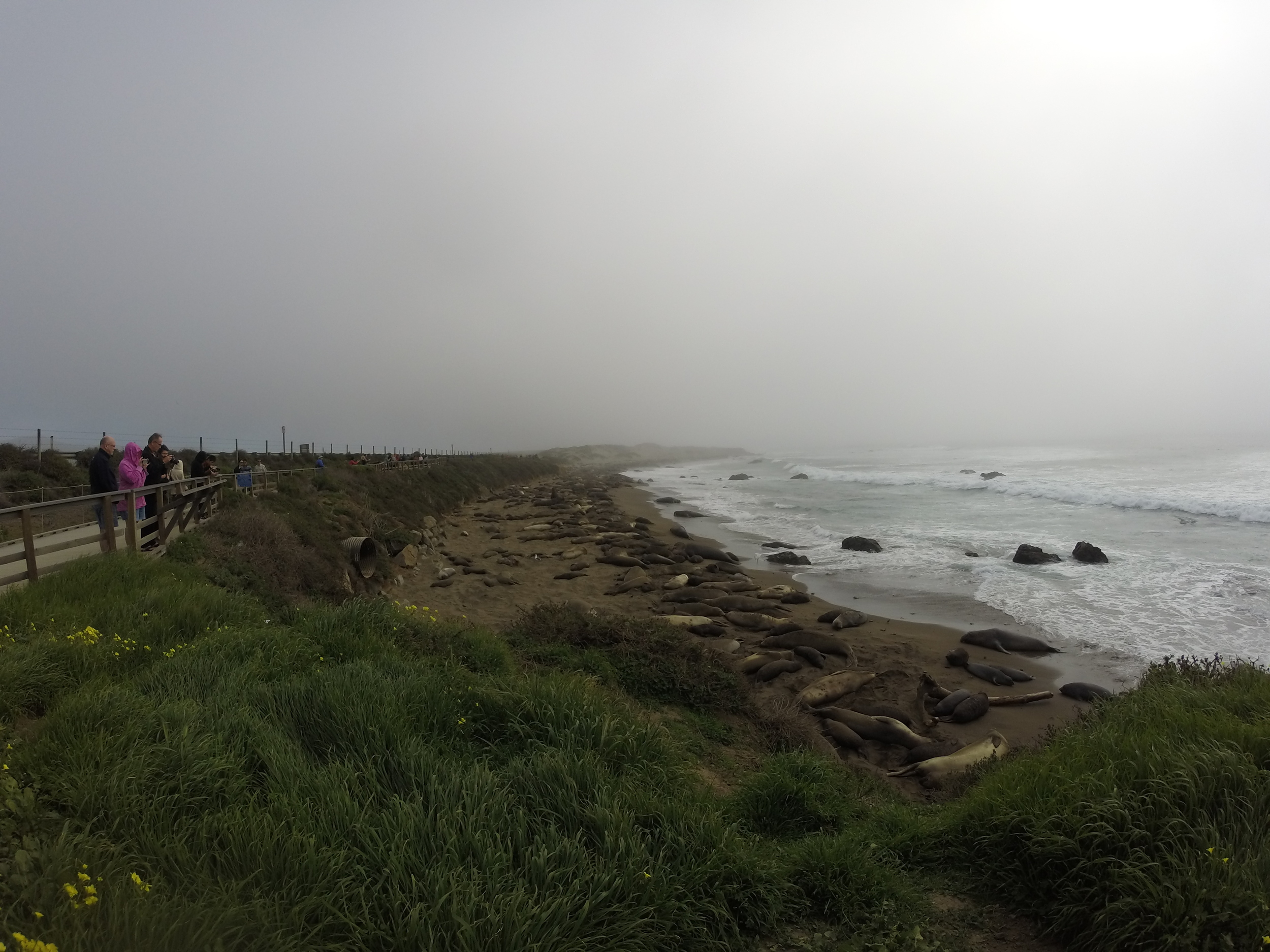 Elephant seals are a very interesting thing!