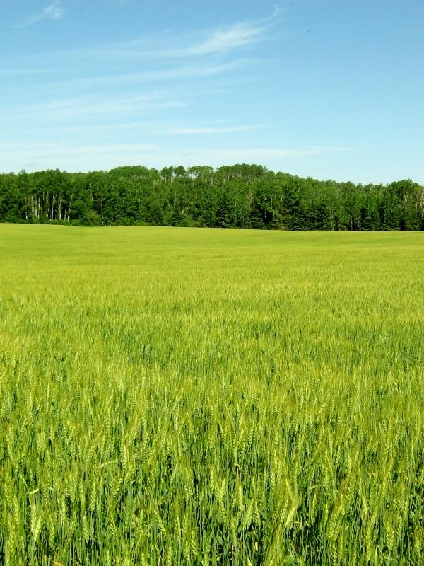 1. Local Grain