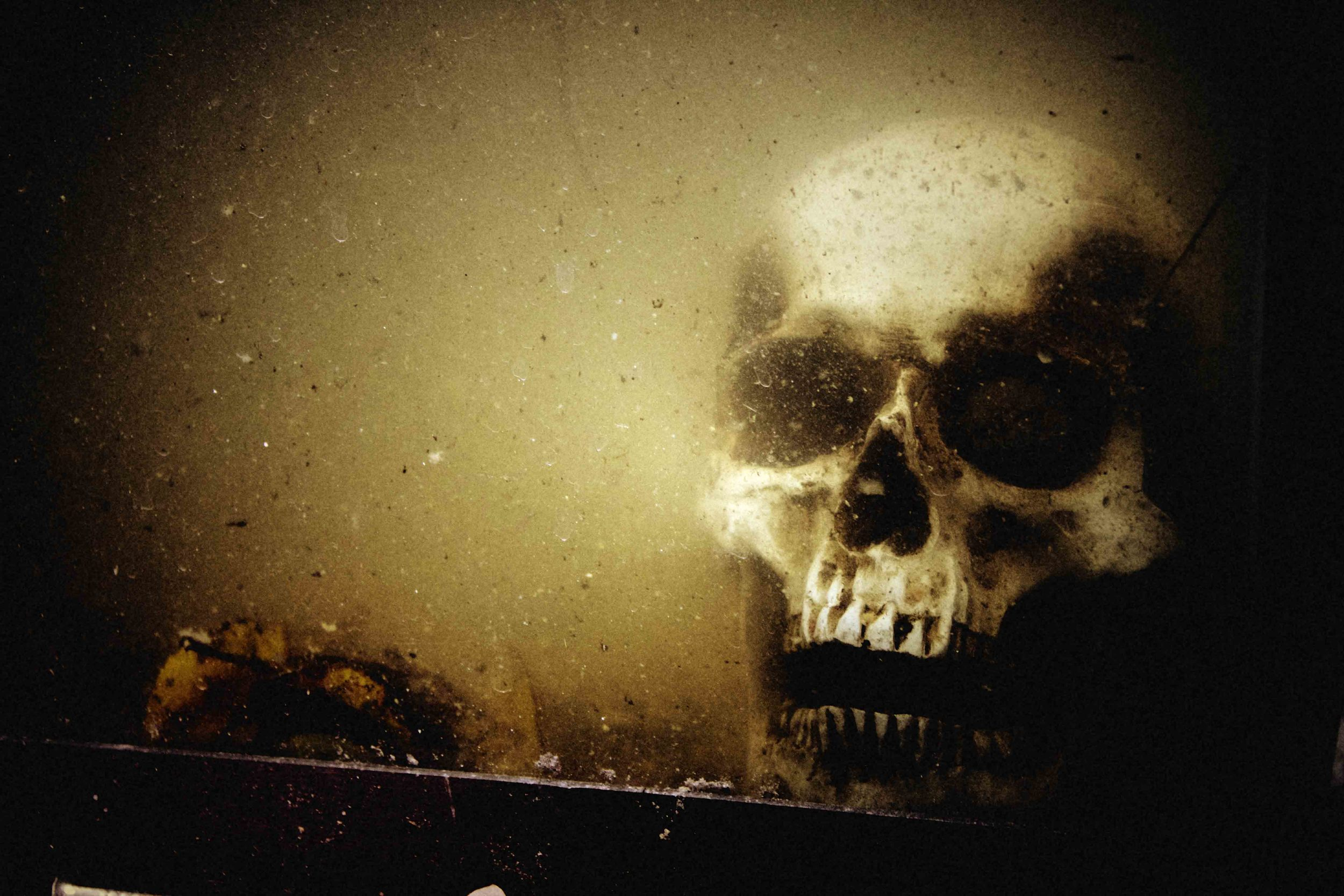 THE REEL OF HORROR - SKULL.jpg