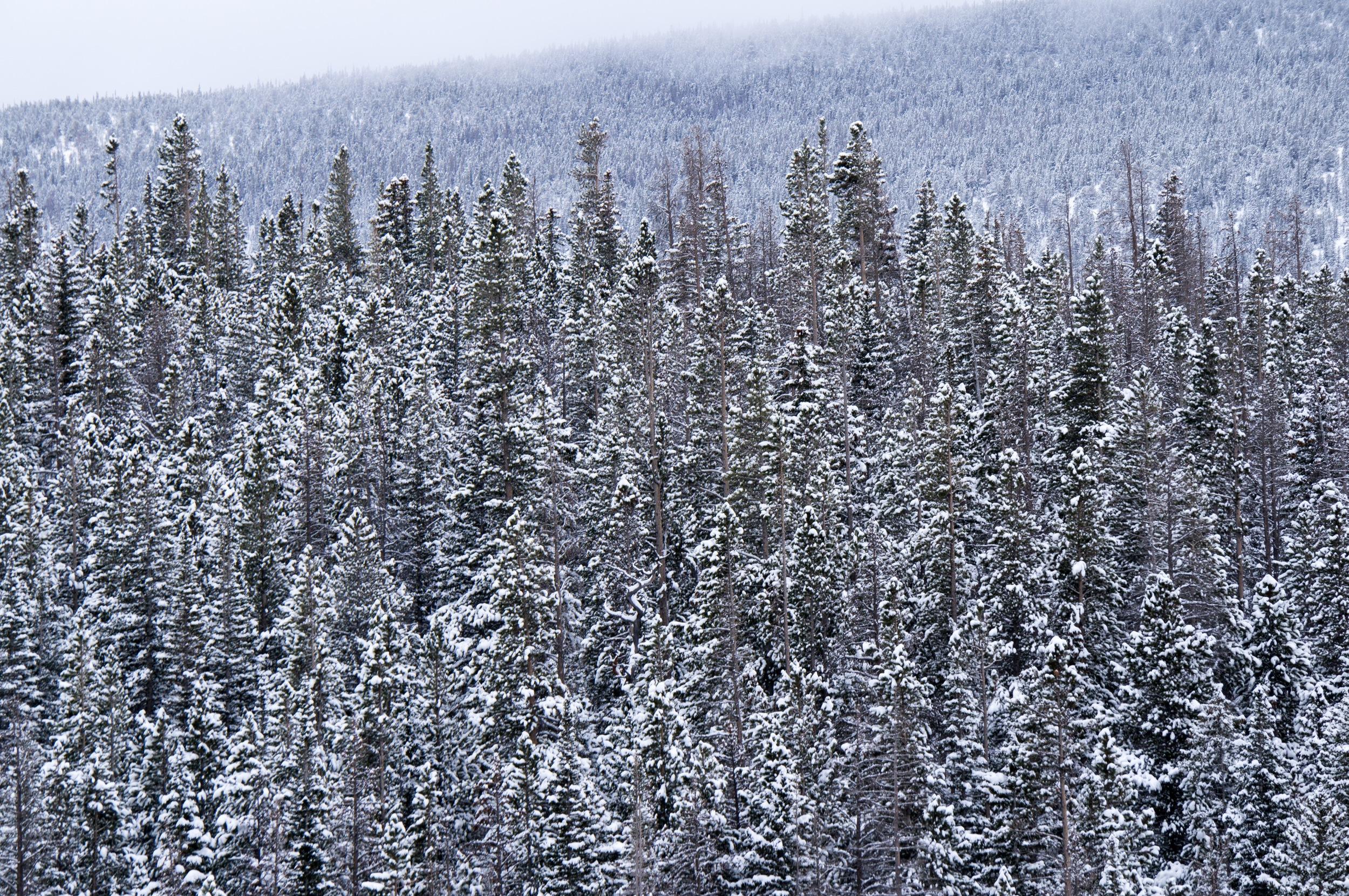 Snowshoeing the Rockies - 15.jpg