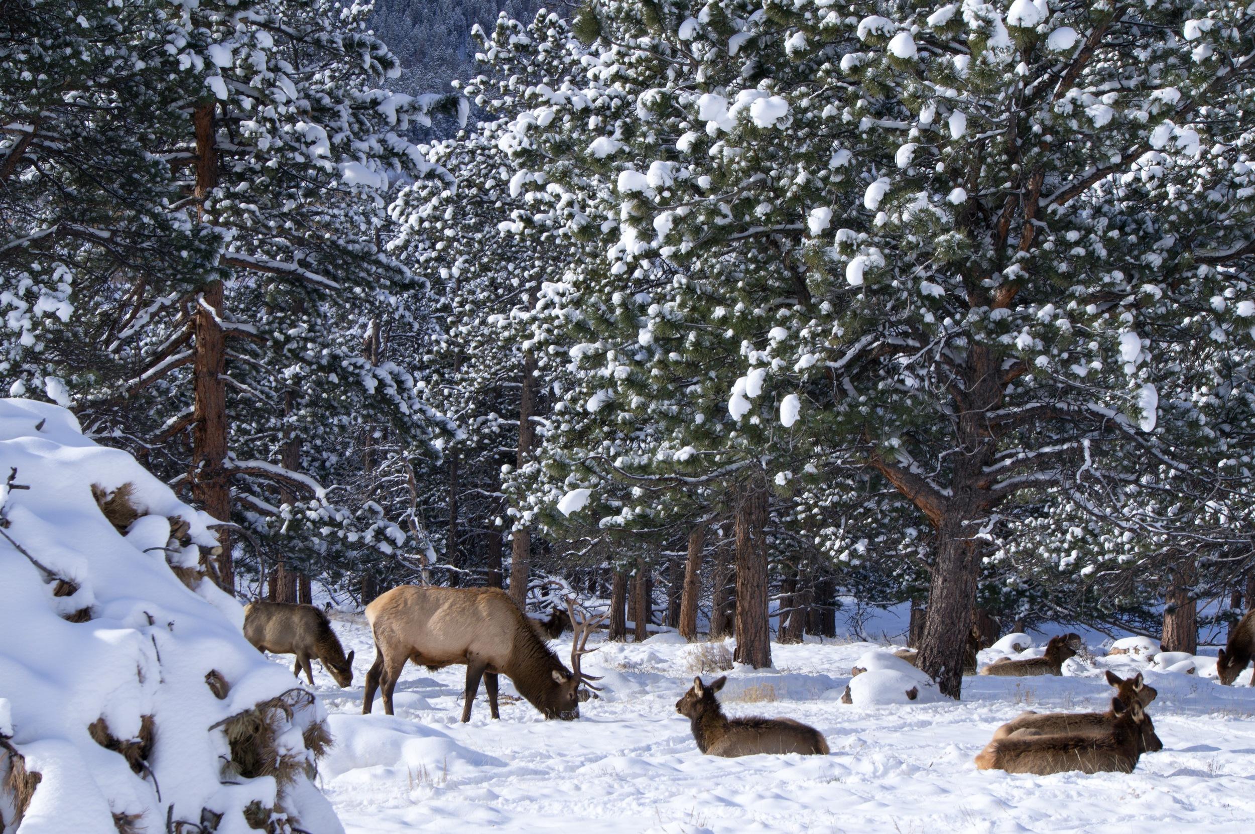 Snowshoeing the Rockies - 10.jpg