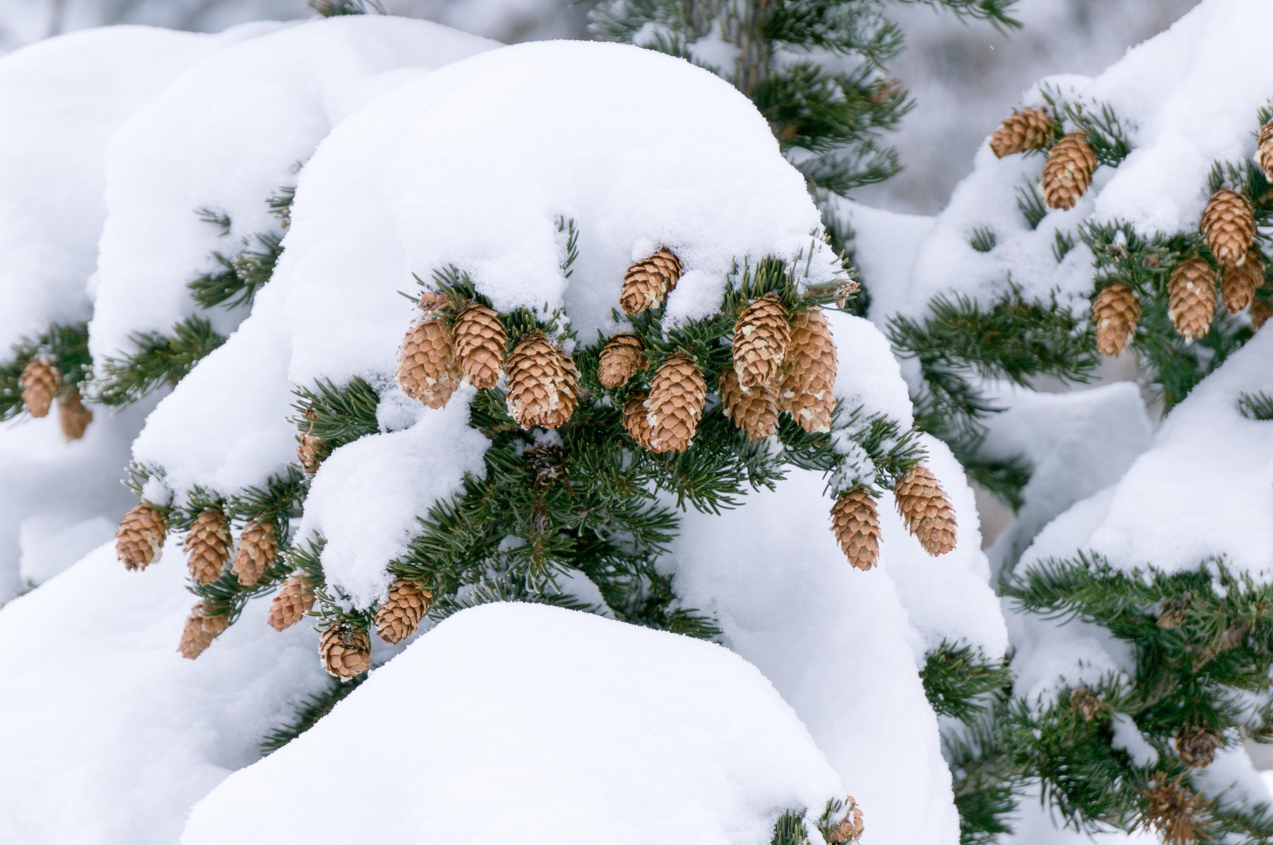Snowshoeing the Rockies - 23.jpg