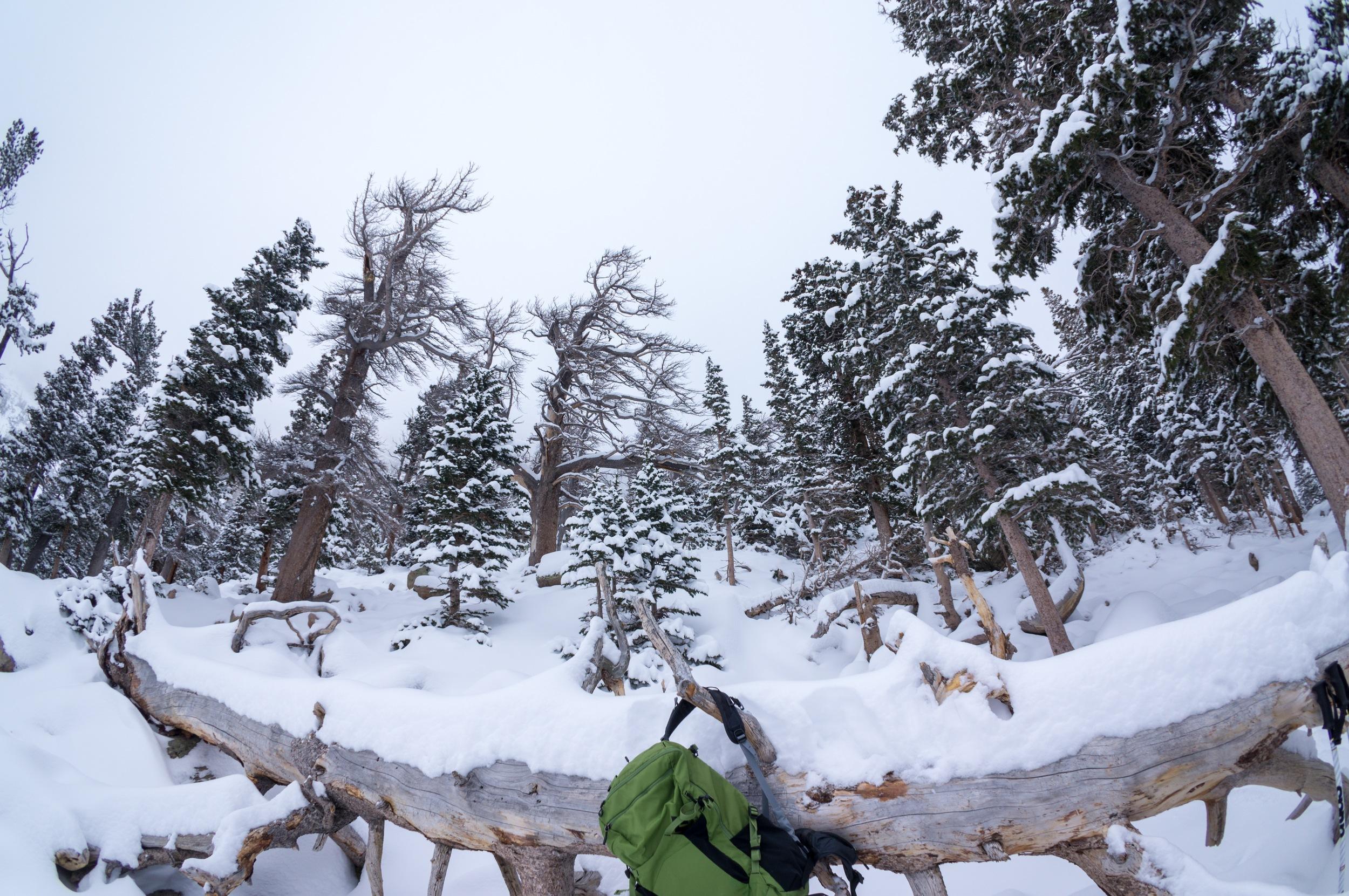 Snowshoeing the Rockies - 42.jpg