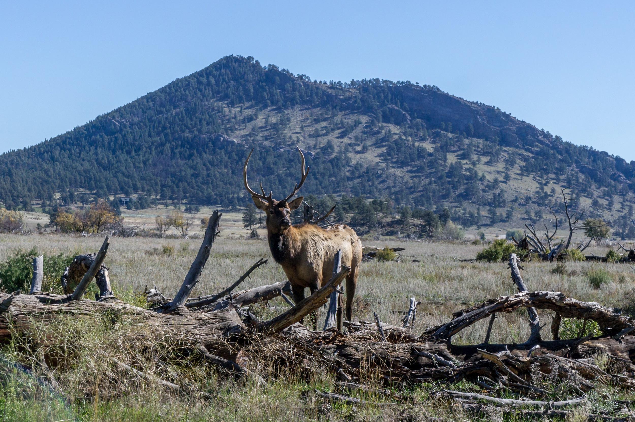 Elk Rut 2013 Edits - 34.jpg