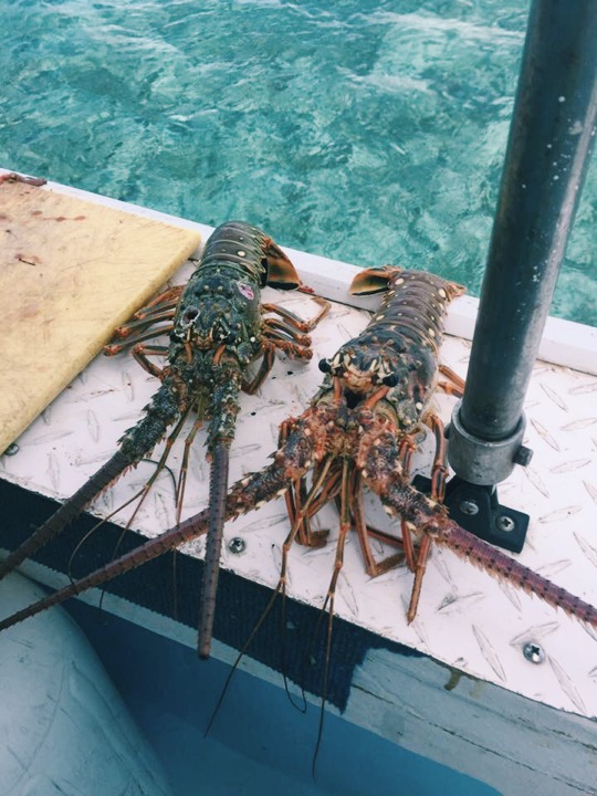 Lobster courtesy of Jordan's spearfishing skills