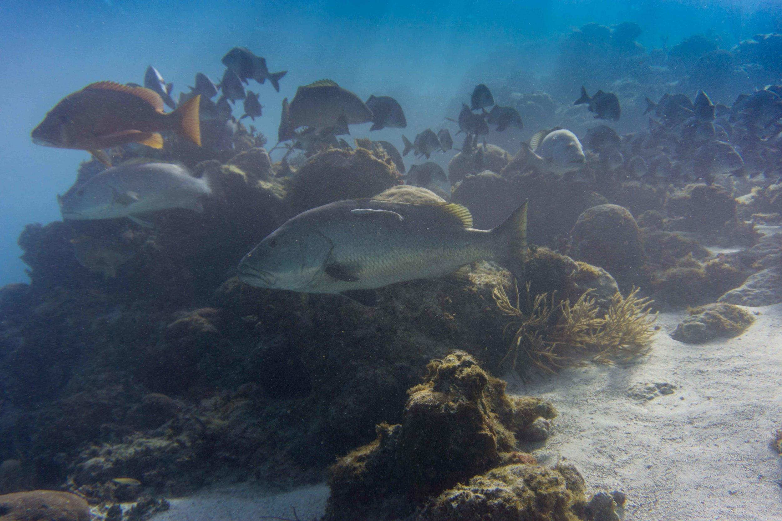 BelizeFixed-14.jpg