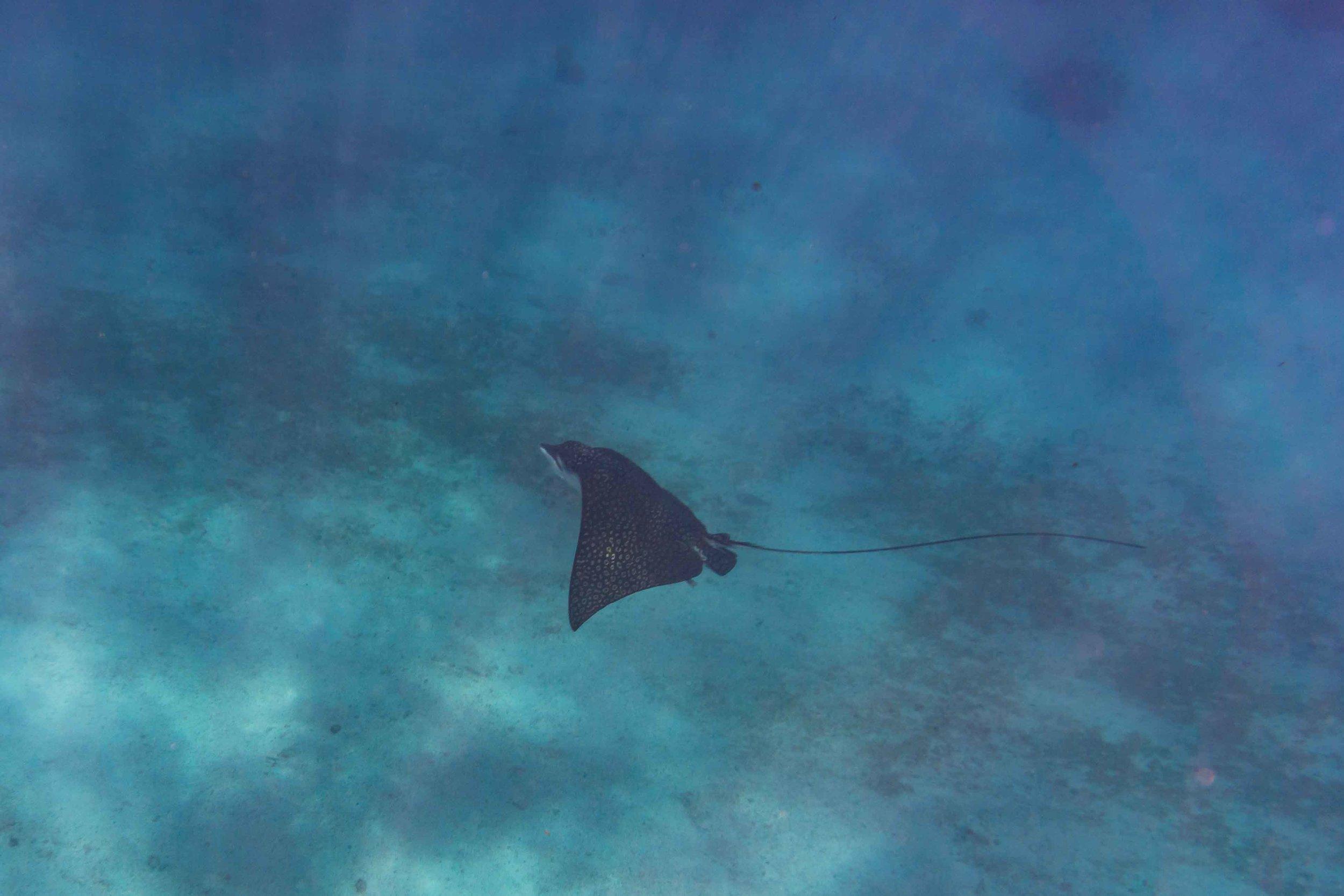 BelizeFixed-18.jpg