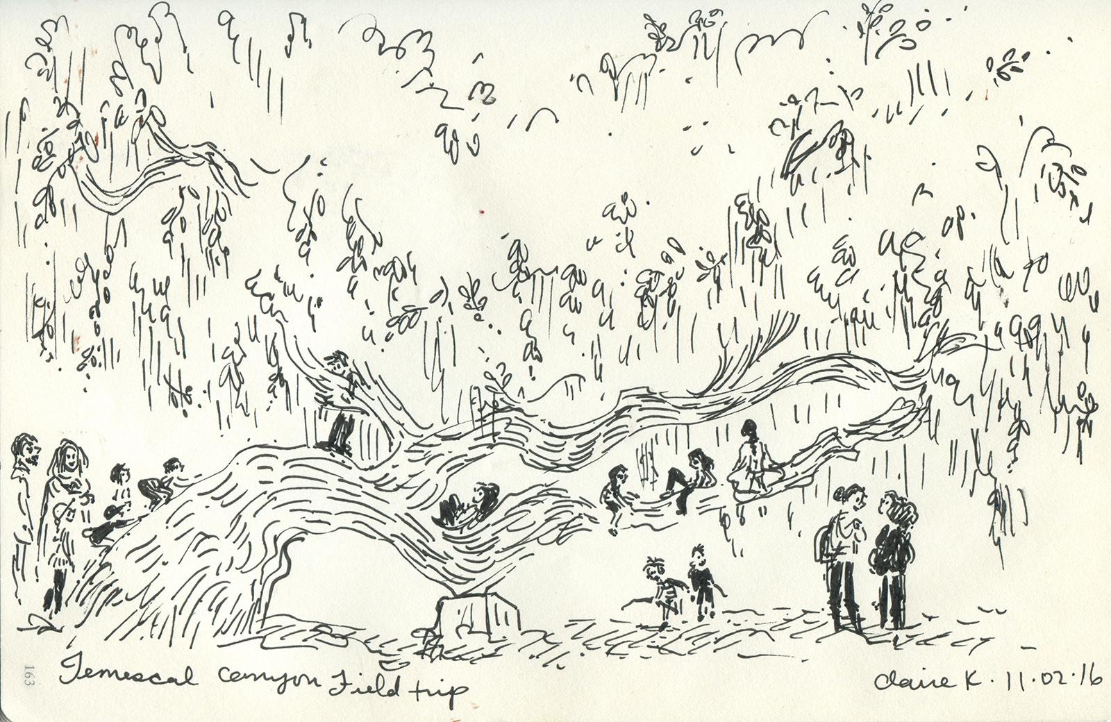OCS tree.jpg
