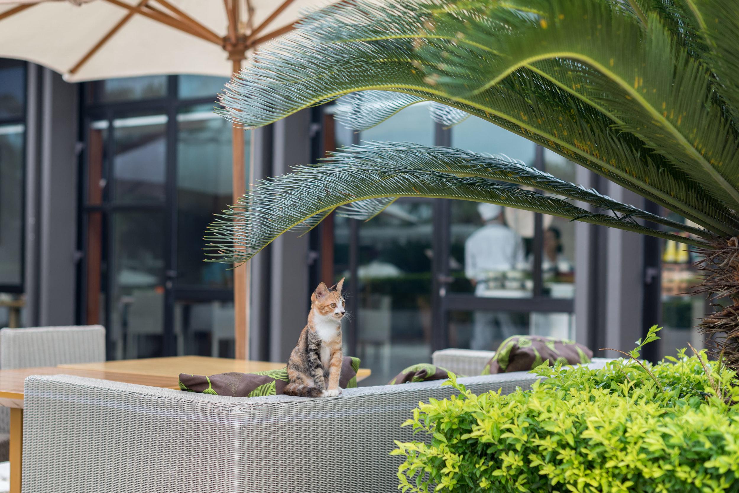 Outdoor Seating Area  Regency Club - Hyatt Regency Danang Resort and Spa