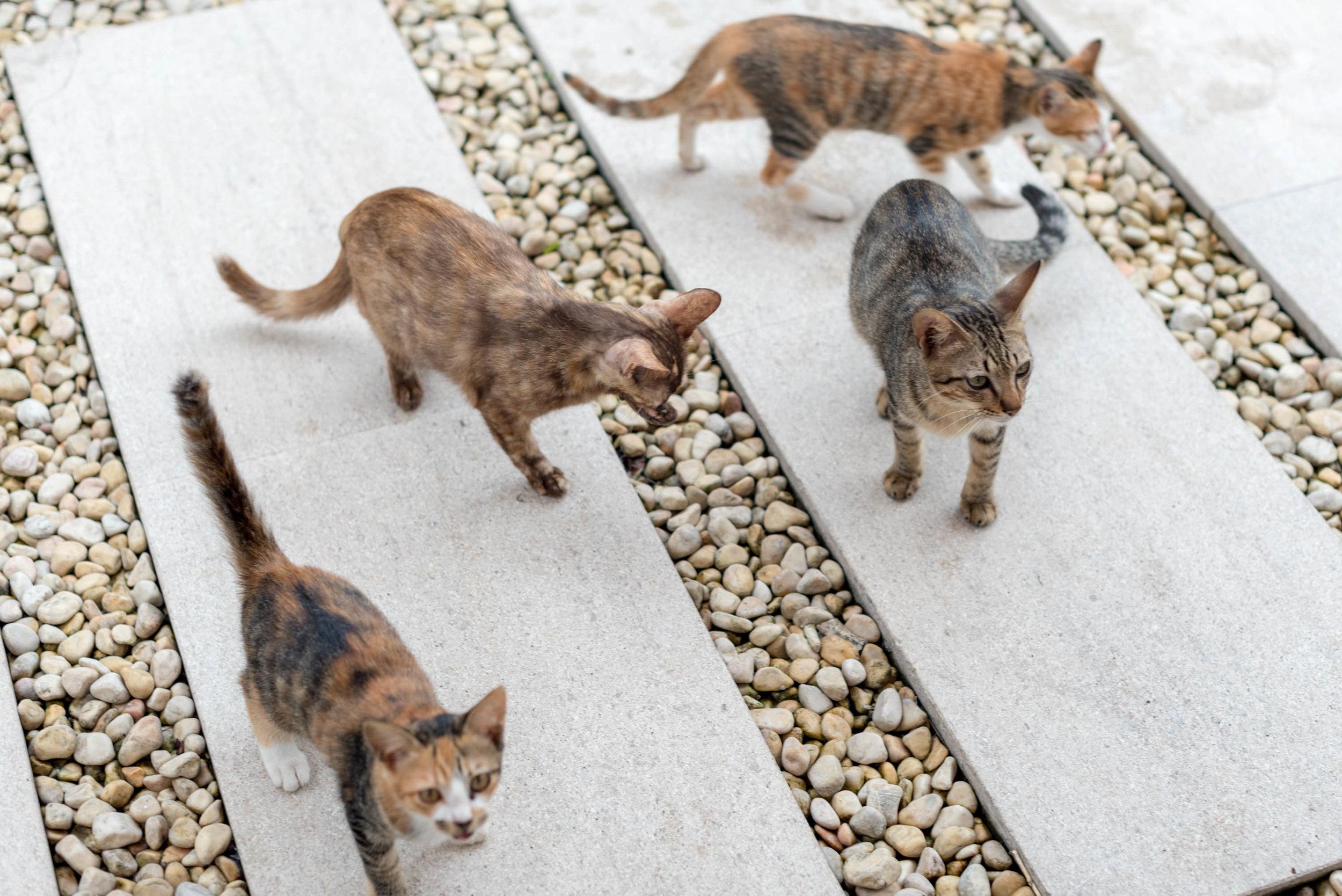 Outdoor Seating Area and Kittens  Regency Club - Hyatt Regency Danang Resort and Spa