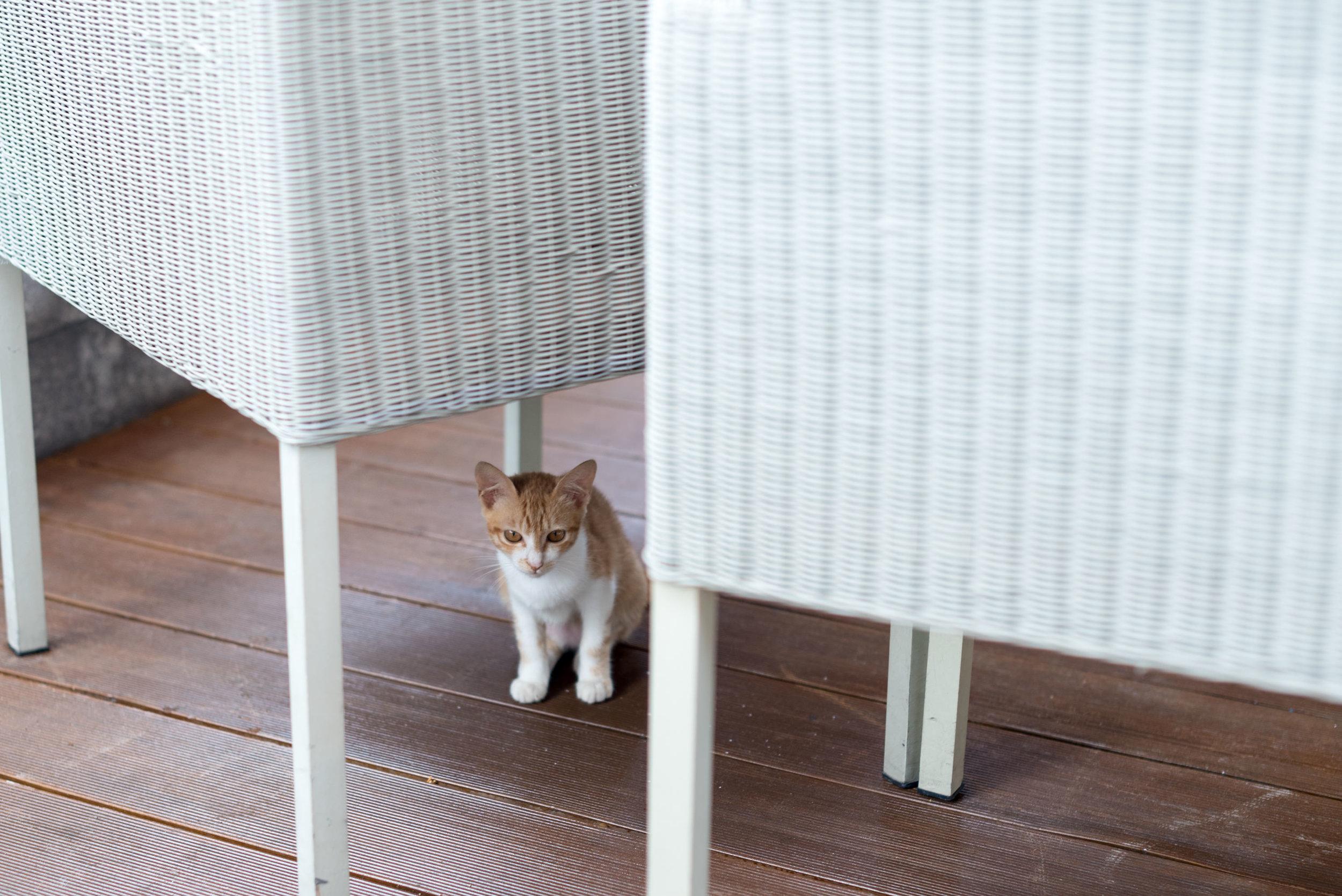 Kittens  Hyatt Regency Danang Resort and Spa