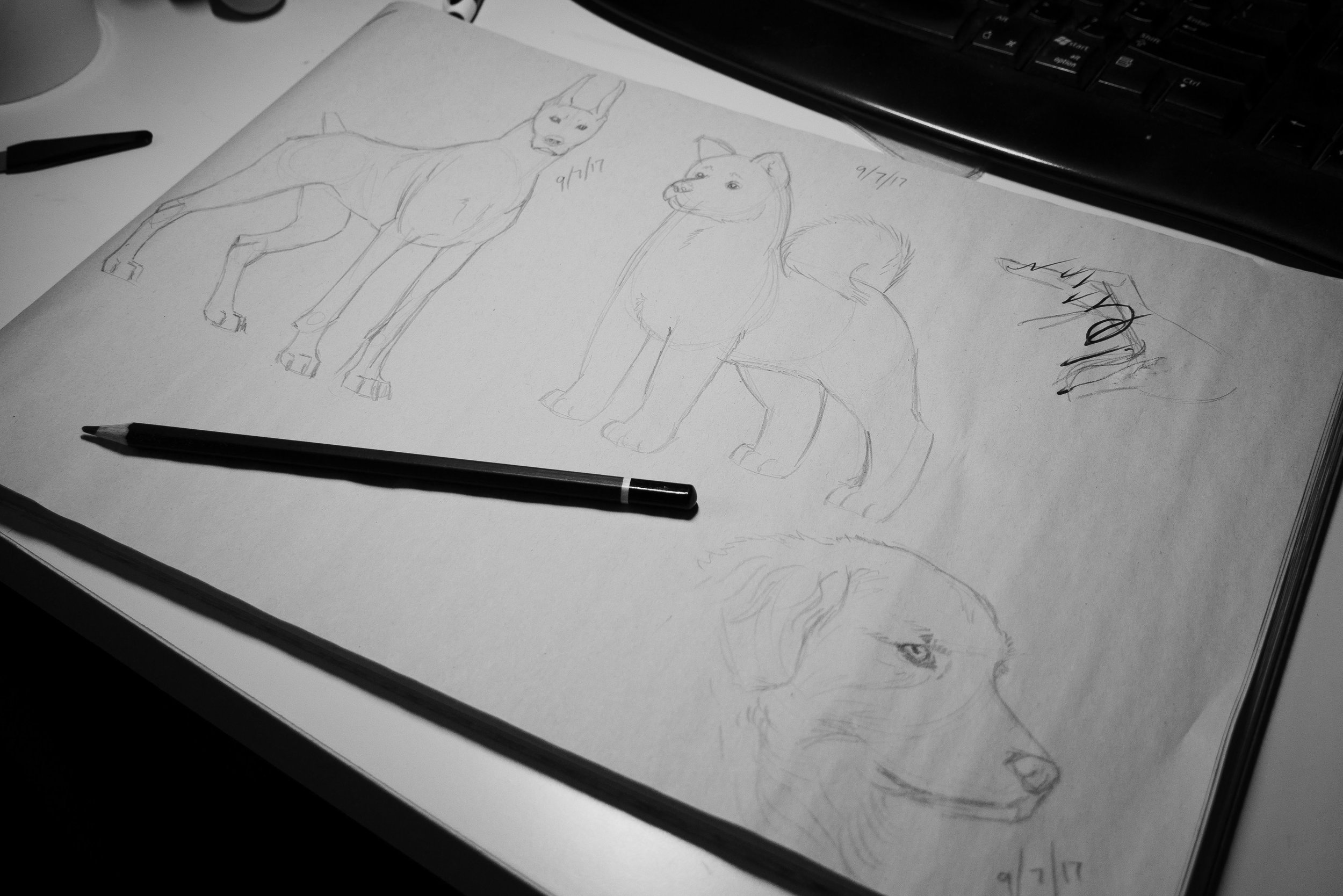 DogSketches_July2017_by_HannahMarshall