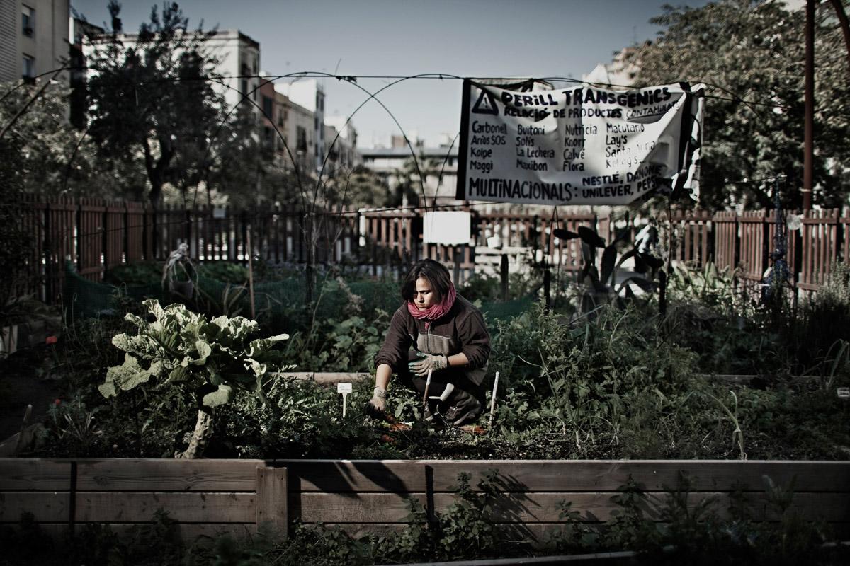 Clara collecting carrots from the vegetable garden Hortet del Forat in the Born neighbourhood, Barcelona