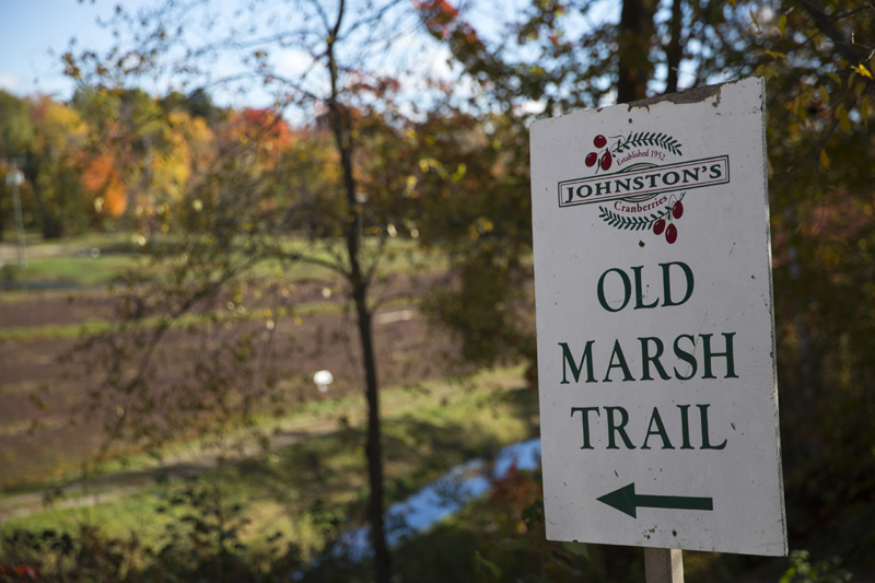 Take a hike down to the marsh during the summer or the fall at Johnston's Cranberry Marsh. Image courtesy of Explorer's Edge