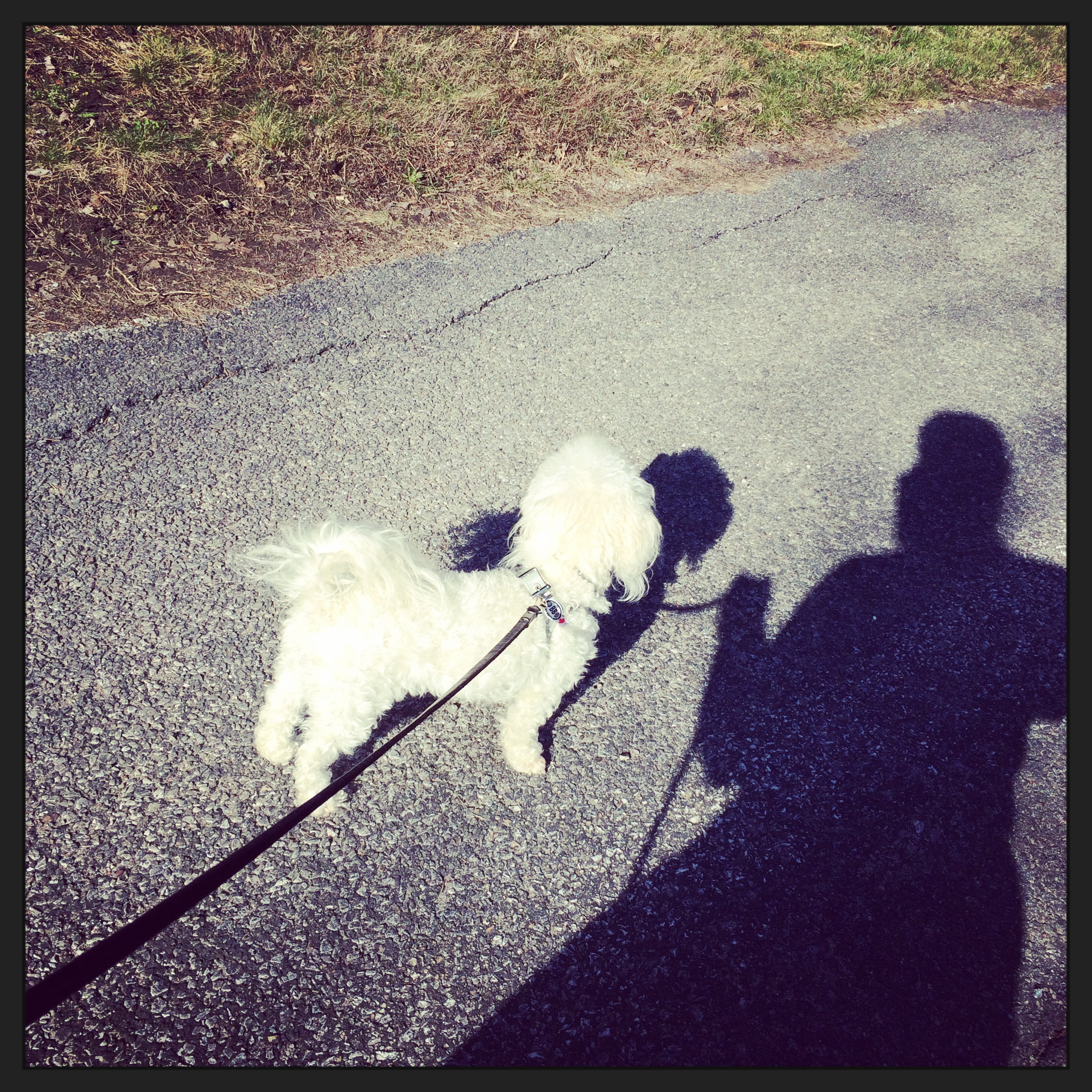 The sun finally came out on Sunday and Tosh and I enjoyed a nice walk.