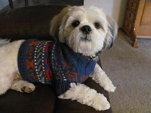 Red_and_Blue_Dog_Sweater_2011-11-16_011_medium.JPG