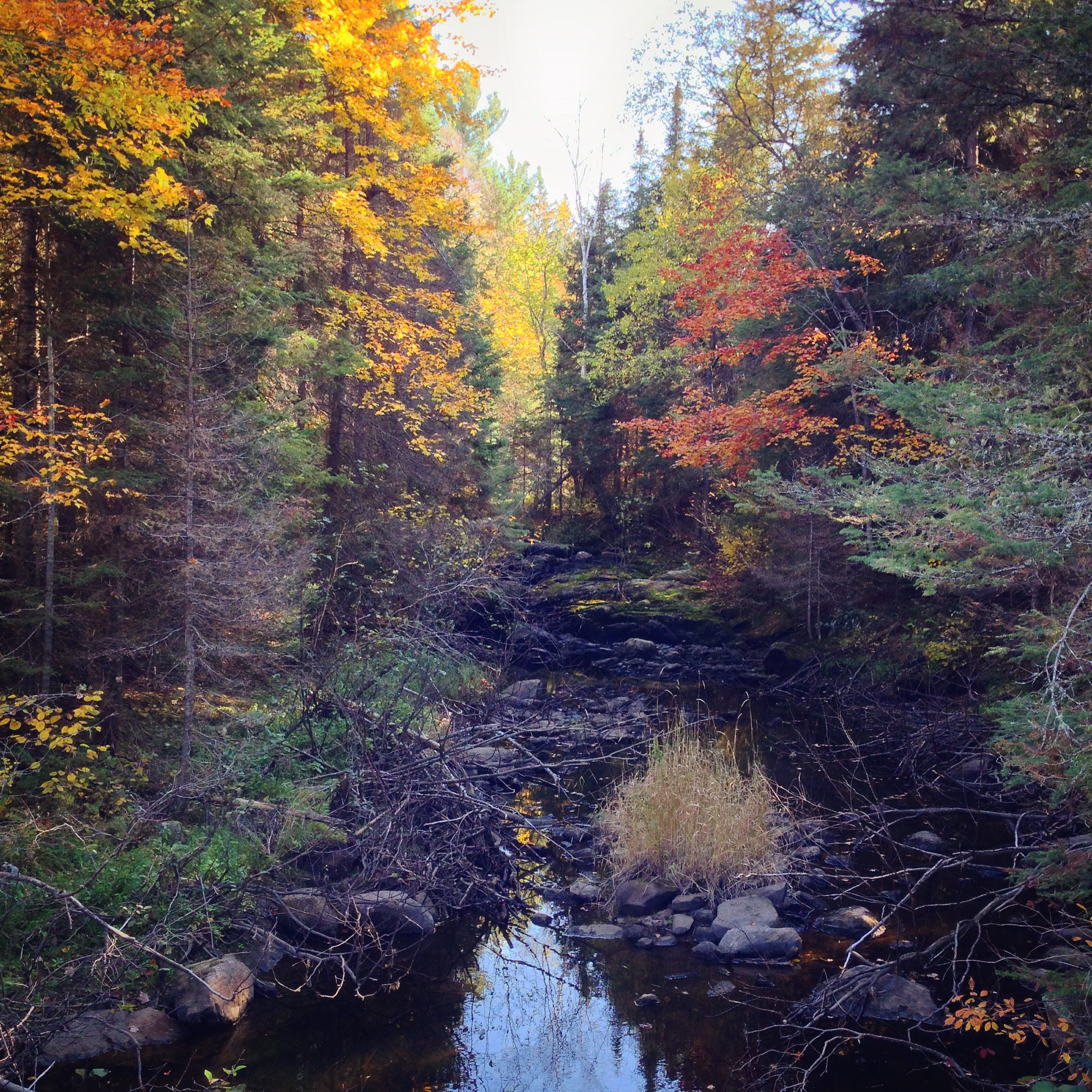 For Thanksgiving on Sunday we headed out to the backcountry of Magnetawan to Jim's family farm (the part of the region that inspired the fall collection this year). This photo is from the annual walk that takes place with all those up at the neighbouring farms. What a beautiful place!
