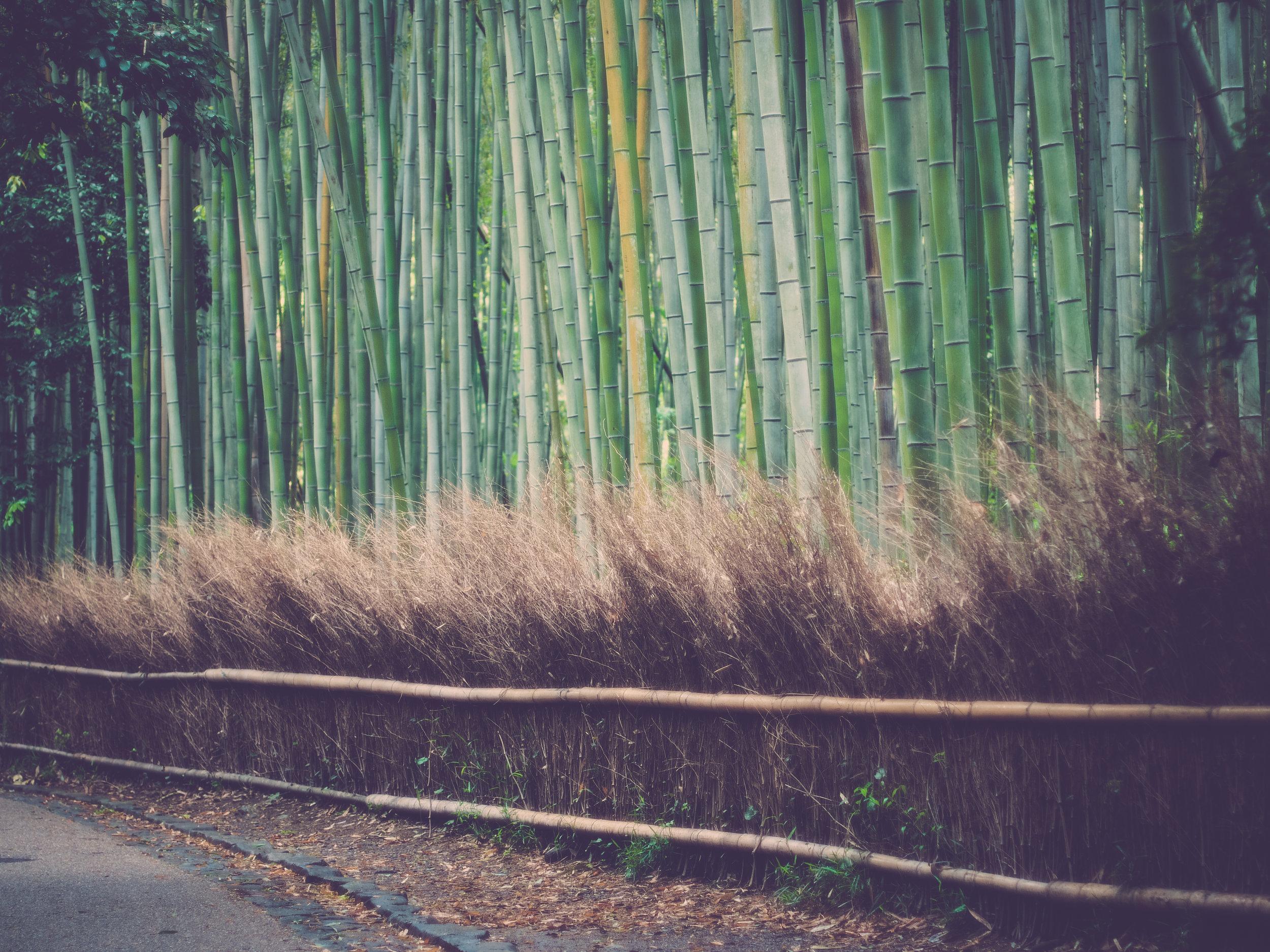 kyoto-60.jpg