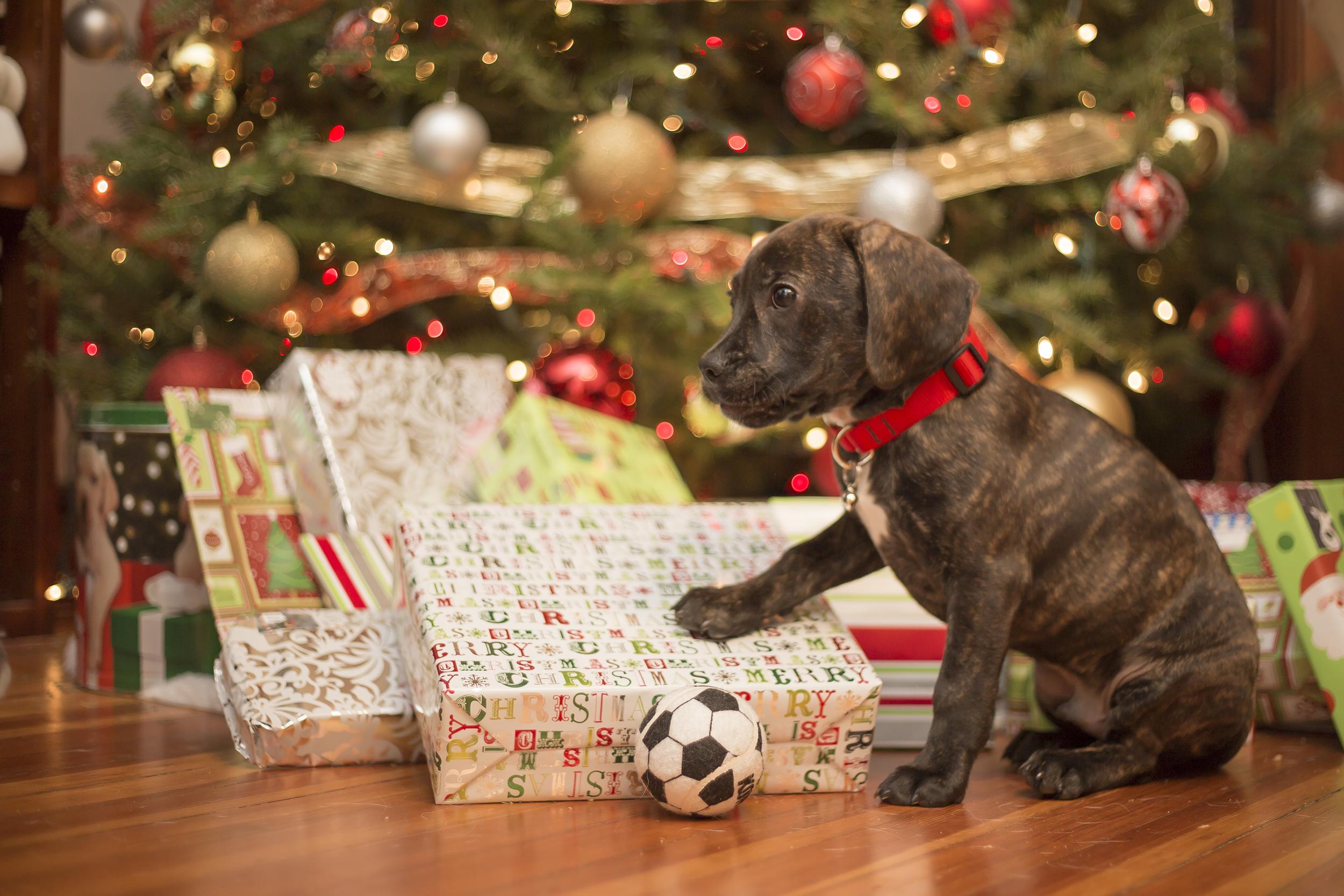 Puppy Photos-1.jpg