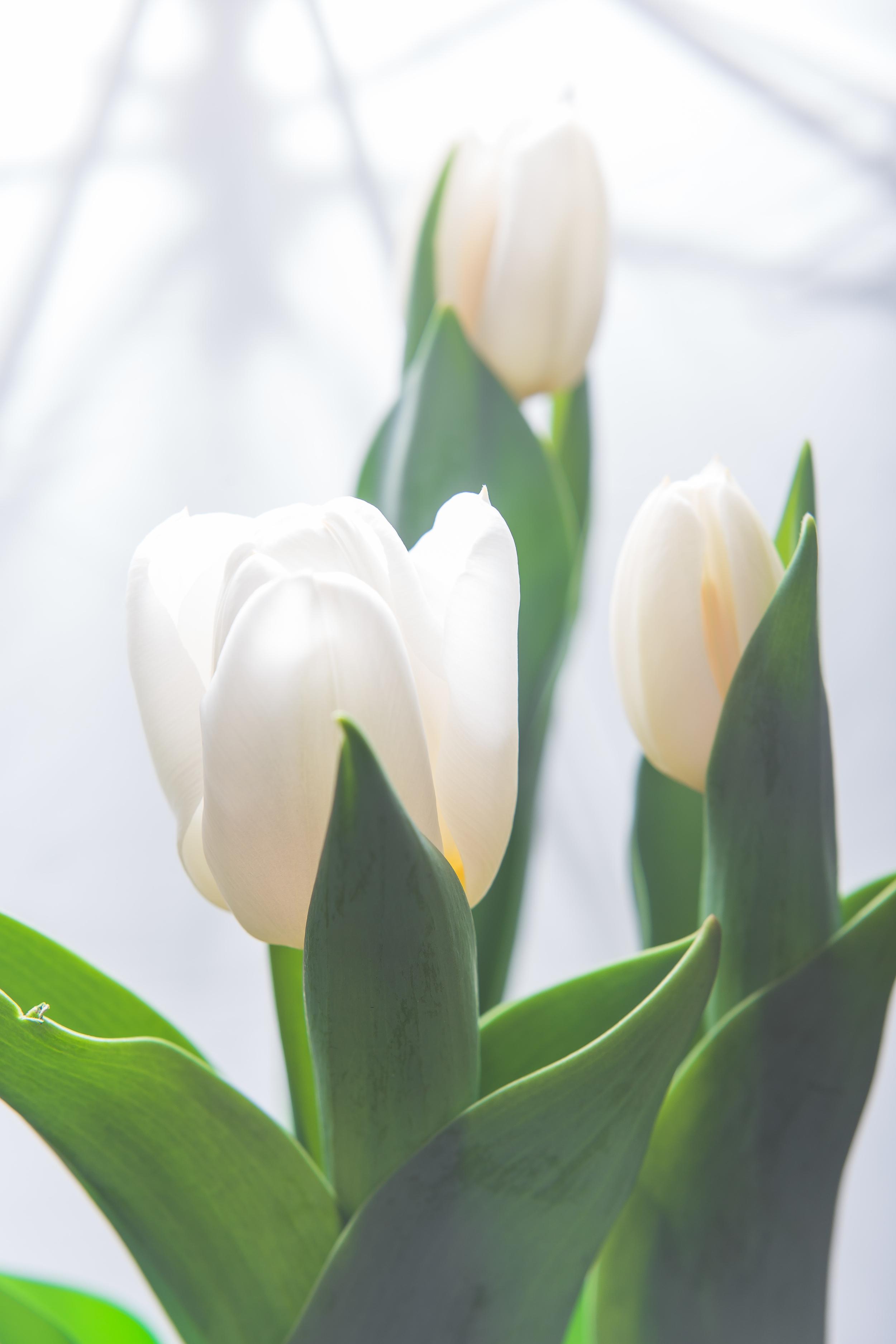 Day 101 - Spring Awakening