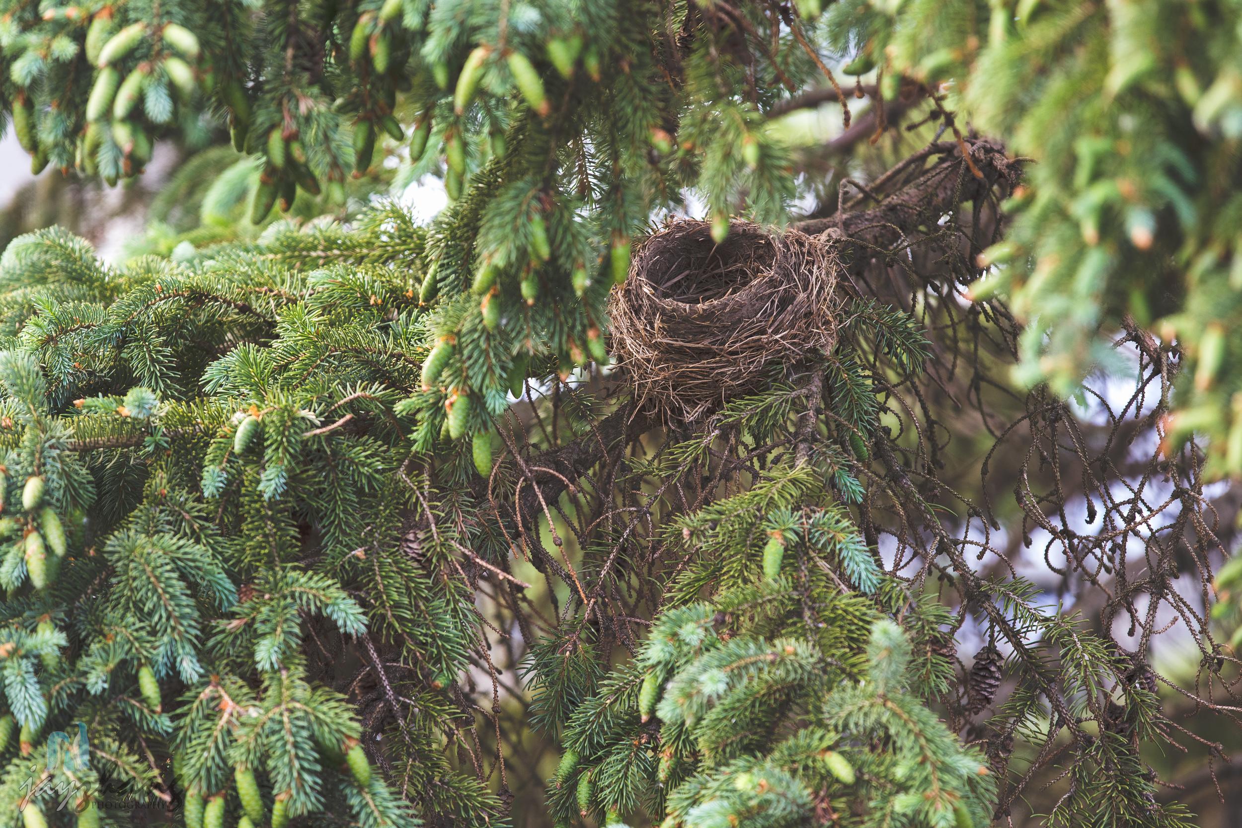 Day 154 - Empty Nest