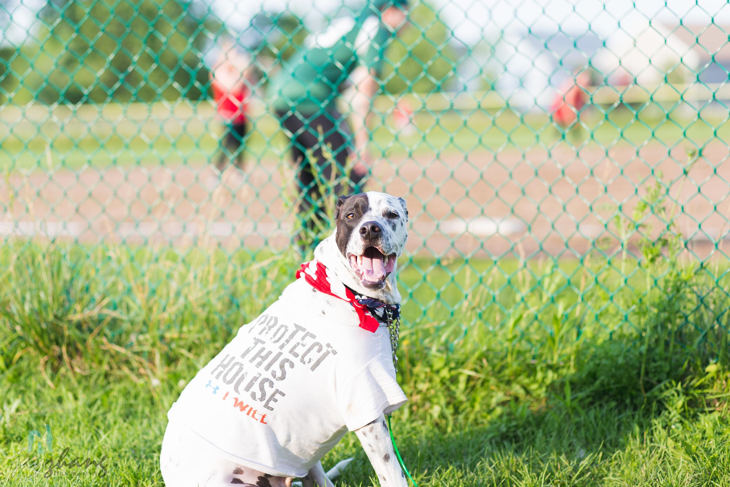 Day 191 - Happy Dog-2.jpg