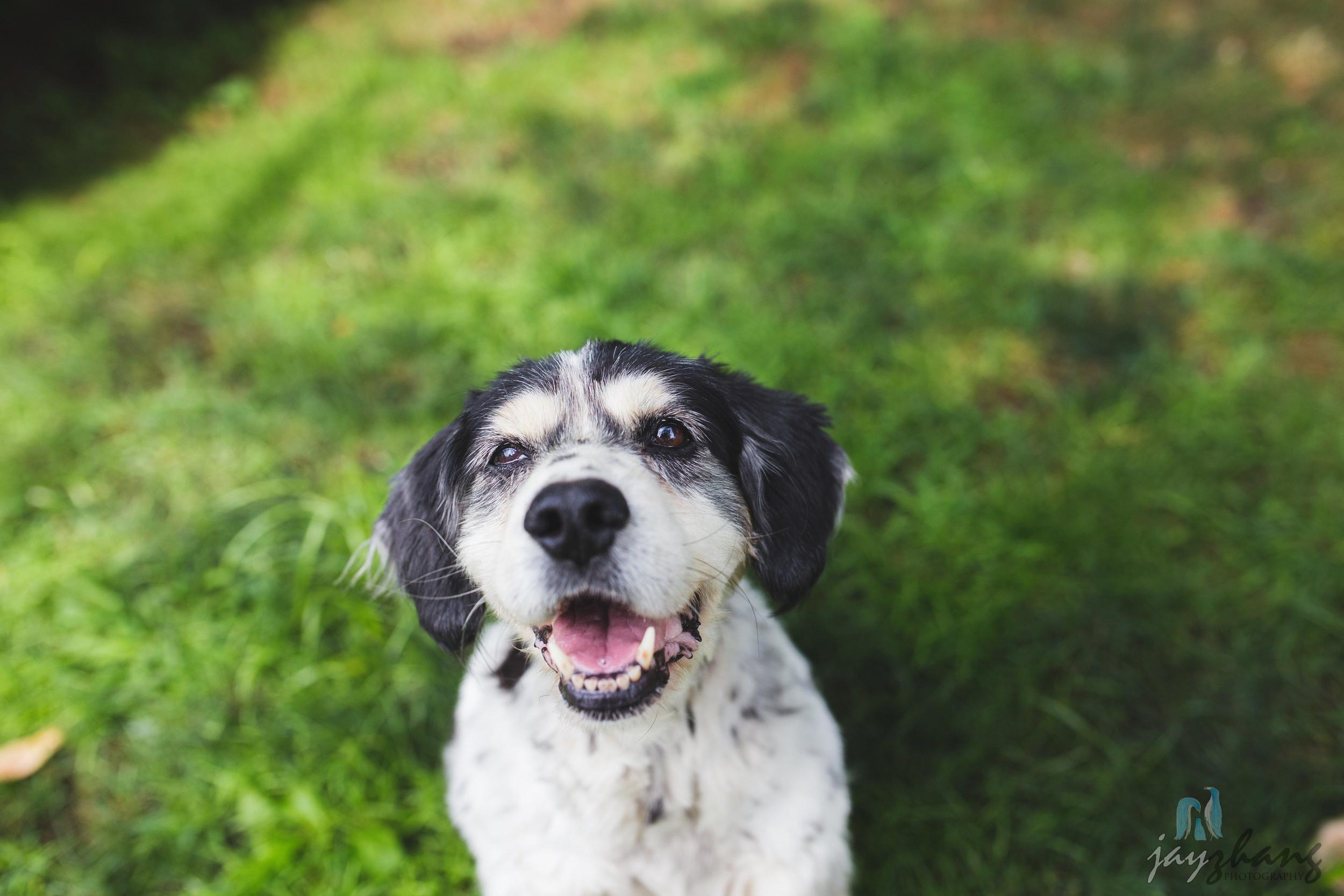 Day 229 - Healthy Pups-4.jpg