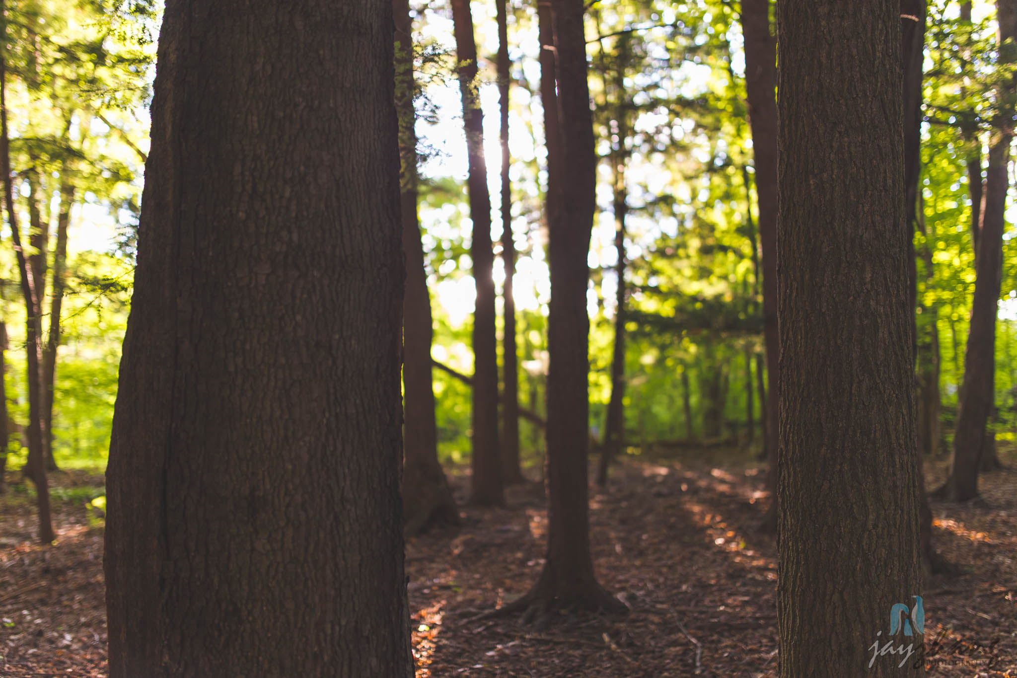 Day 241 - Light through the Forest