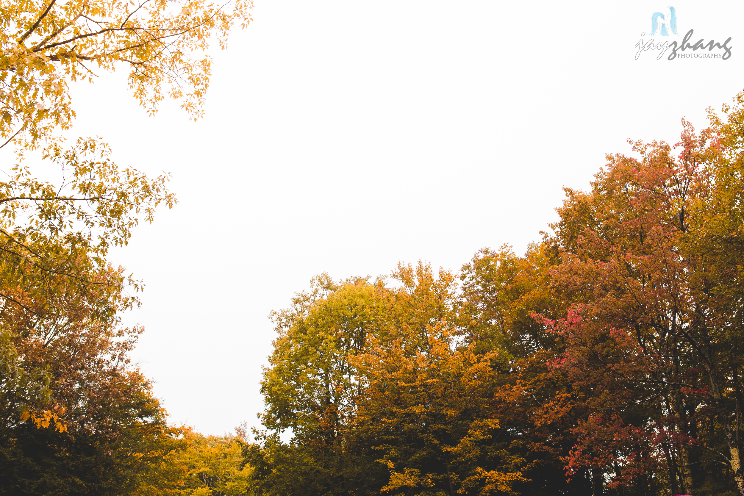 Day 278 - Forest of Colors