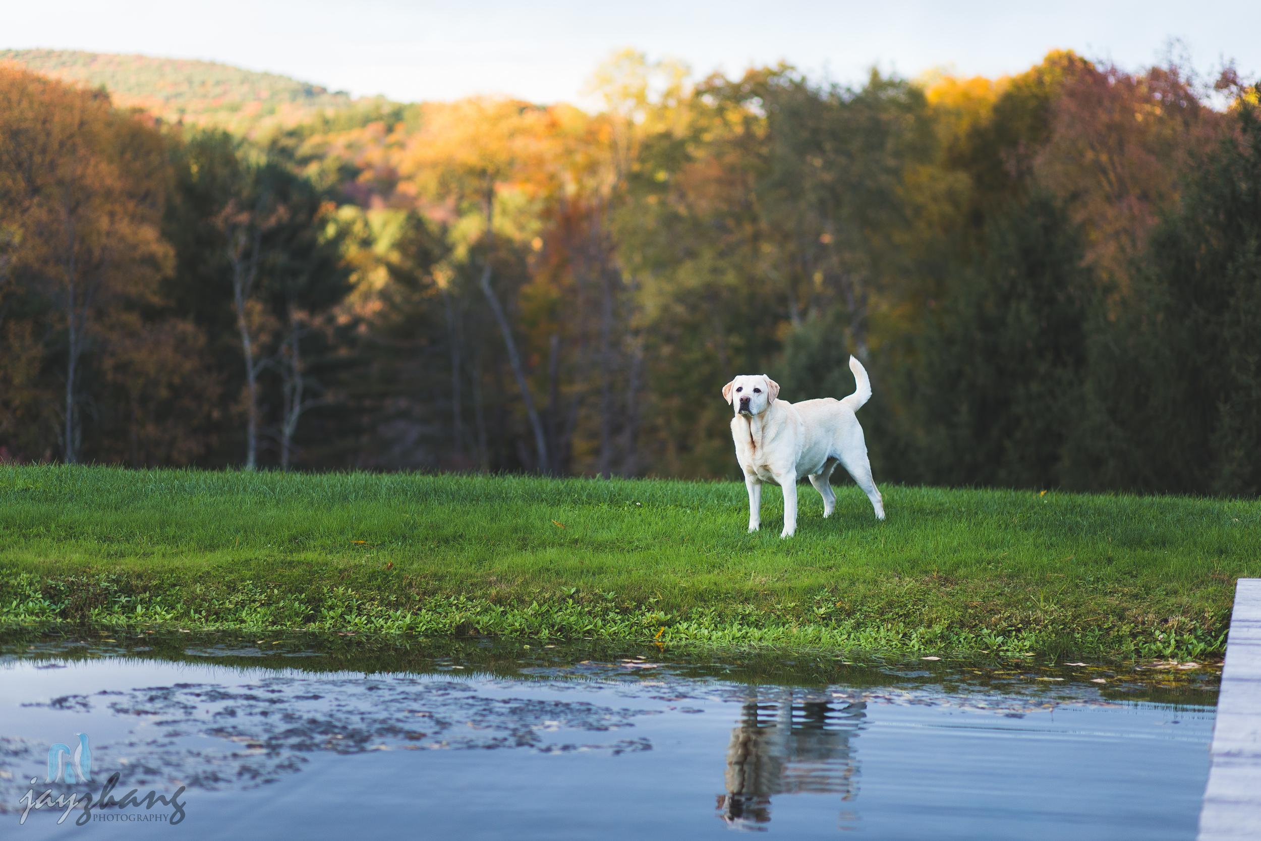 Day 294 - Farm Puppy!!-2.jpg