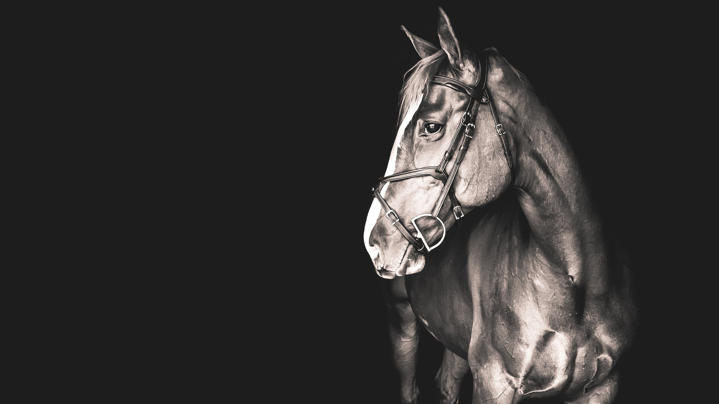 HORSE+PHOTOGRAPHY