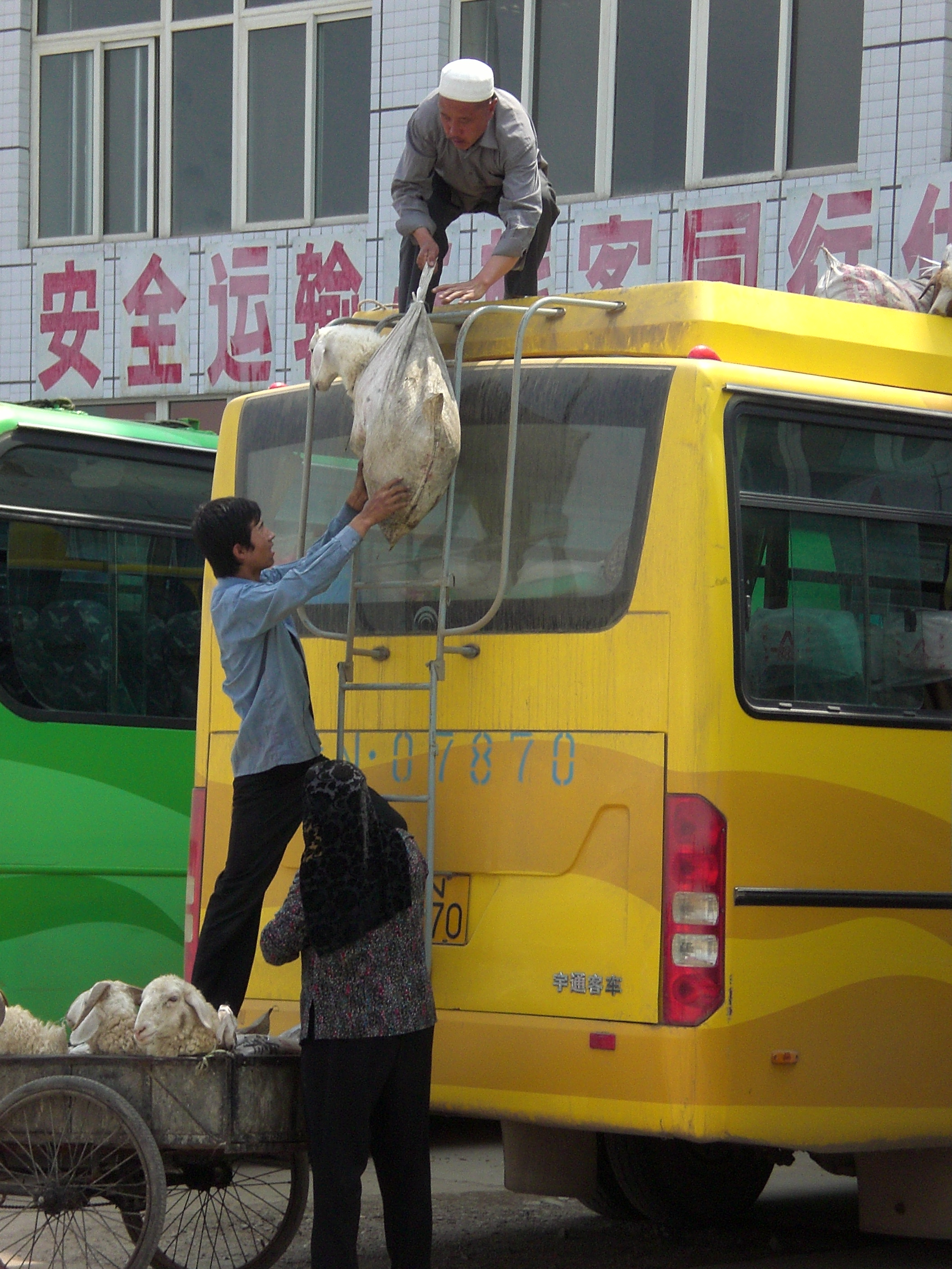 Asia challenges your perceptions in many ways - sheep being delivered via the roof of the bus we were about to board to a nearby town!