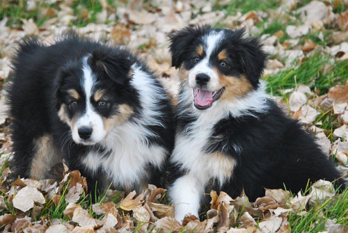 about-puppies.jpg
