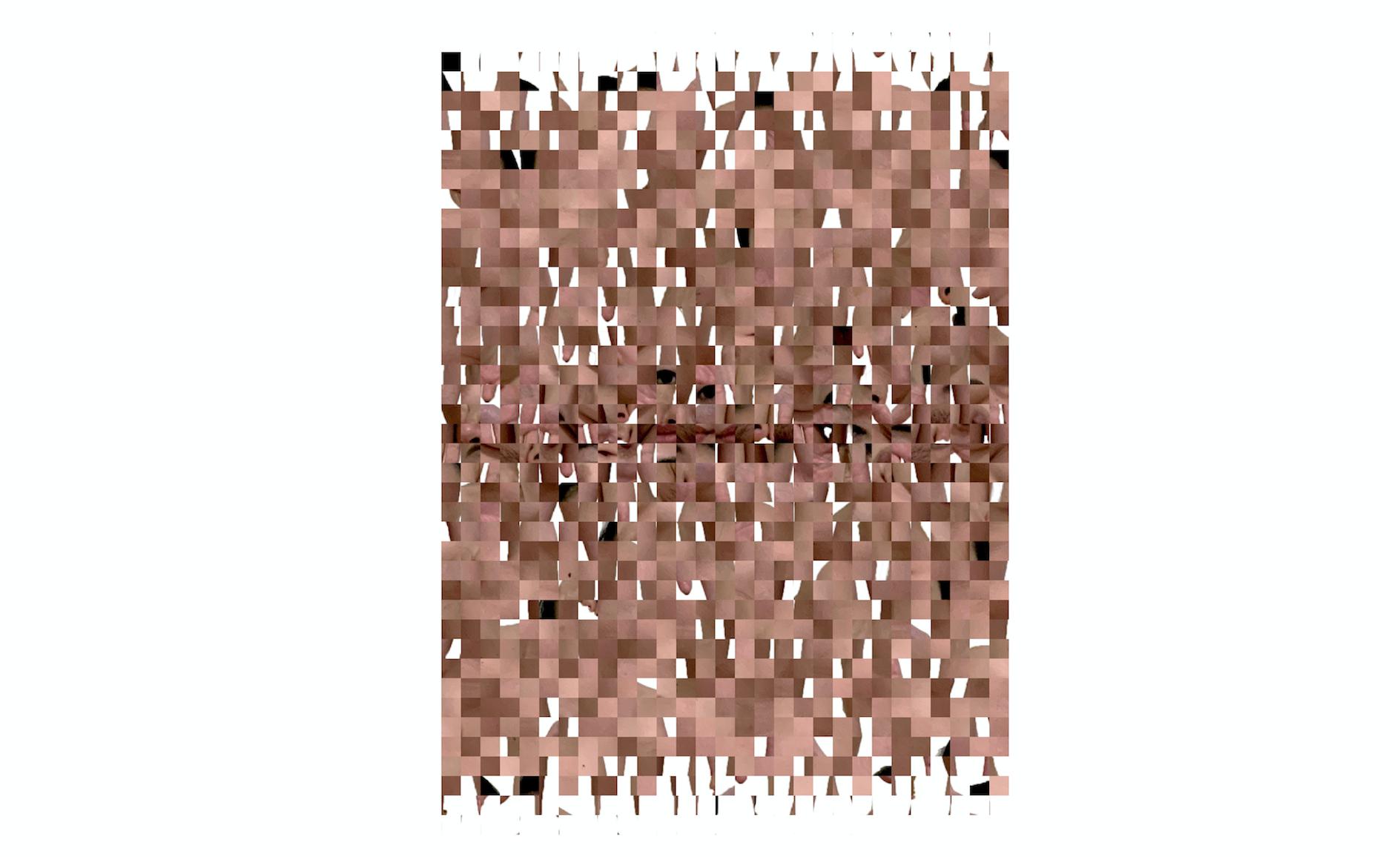 - algorithmic animal gaze