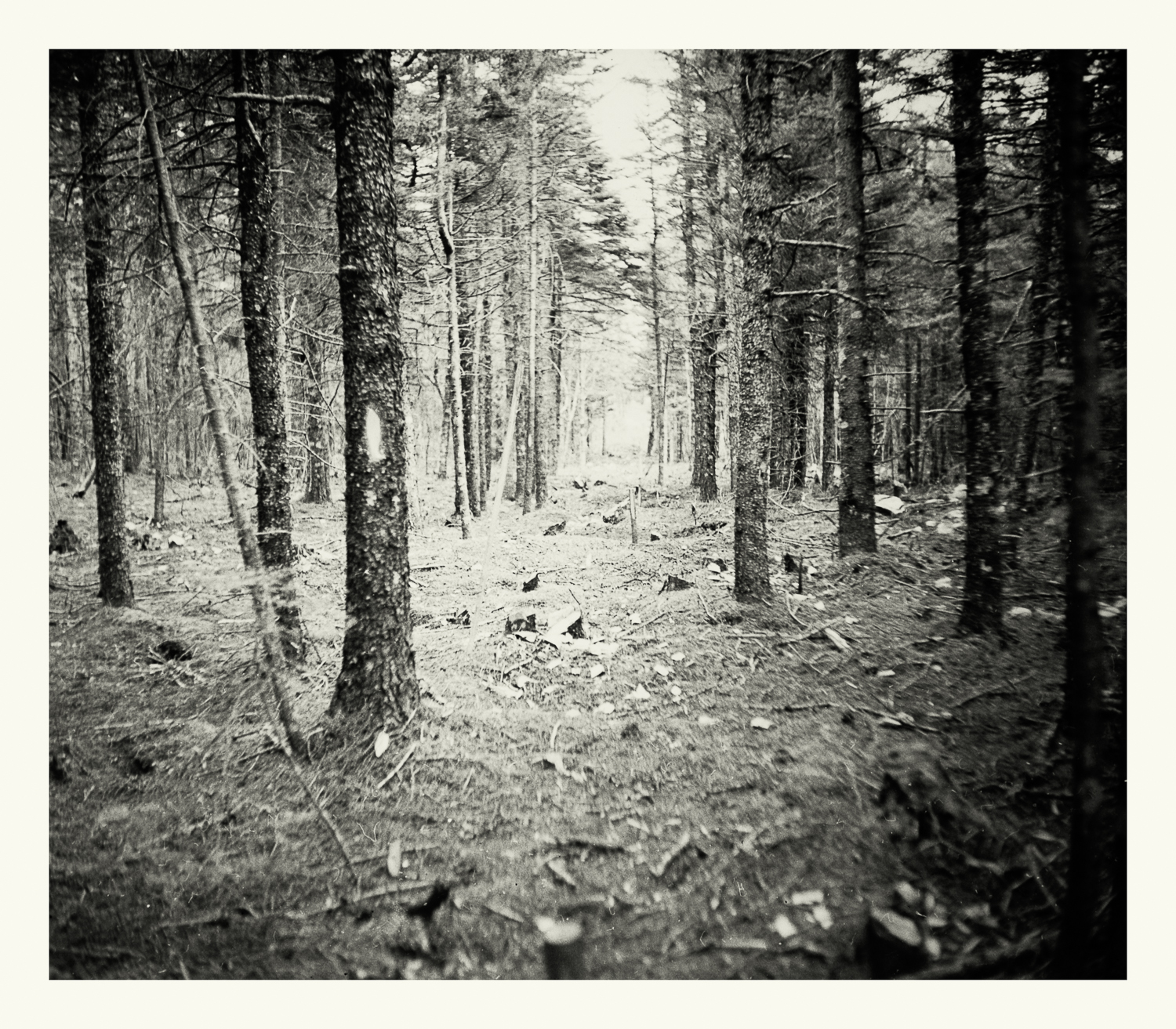 """Photograph No. PC 072. """"Photograph depicting forest cleared to make way for electrical power lines."""" c. 1944. Records of Naval Districts and Shore Establishments, RG 181, NARA Boston."""
