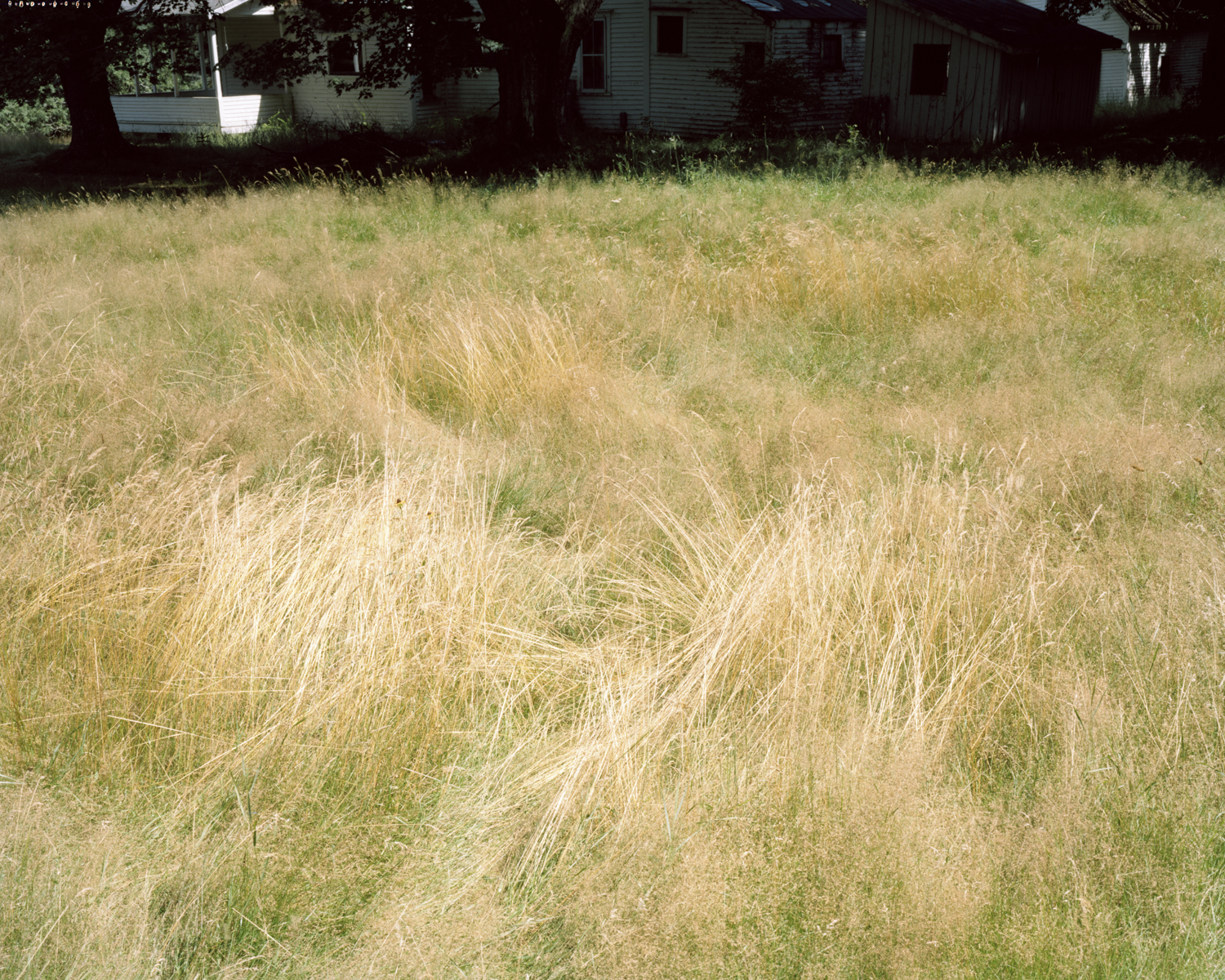 Leaves of Grass - Perkins Township, ME, 2013