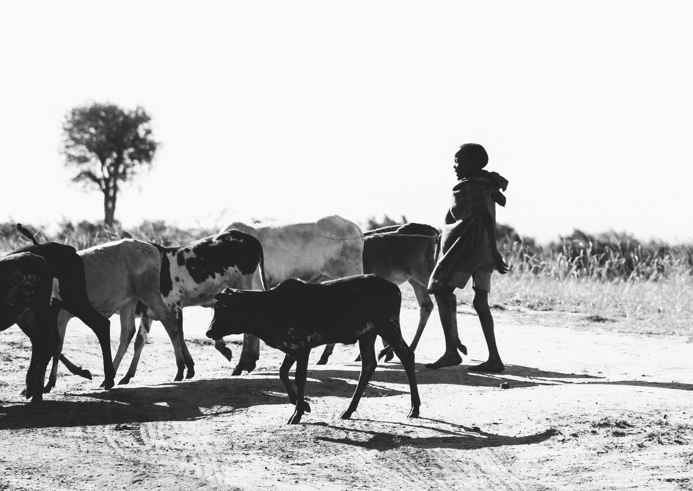 Africa 1176cropped.jpg
