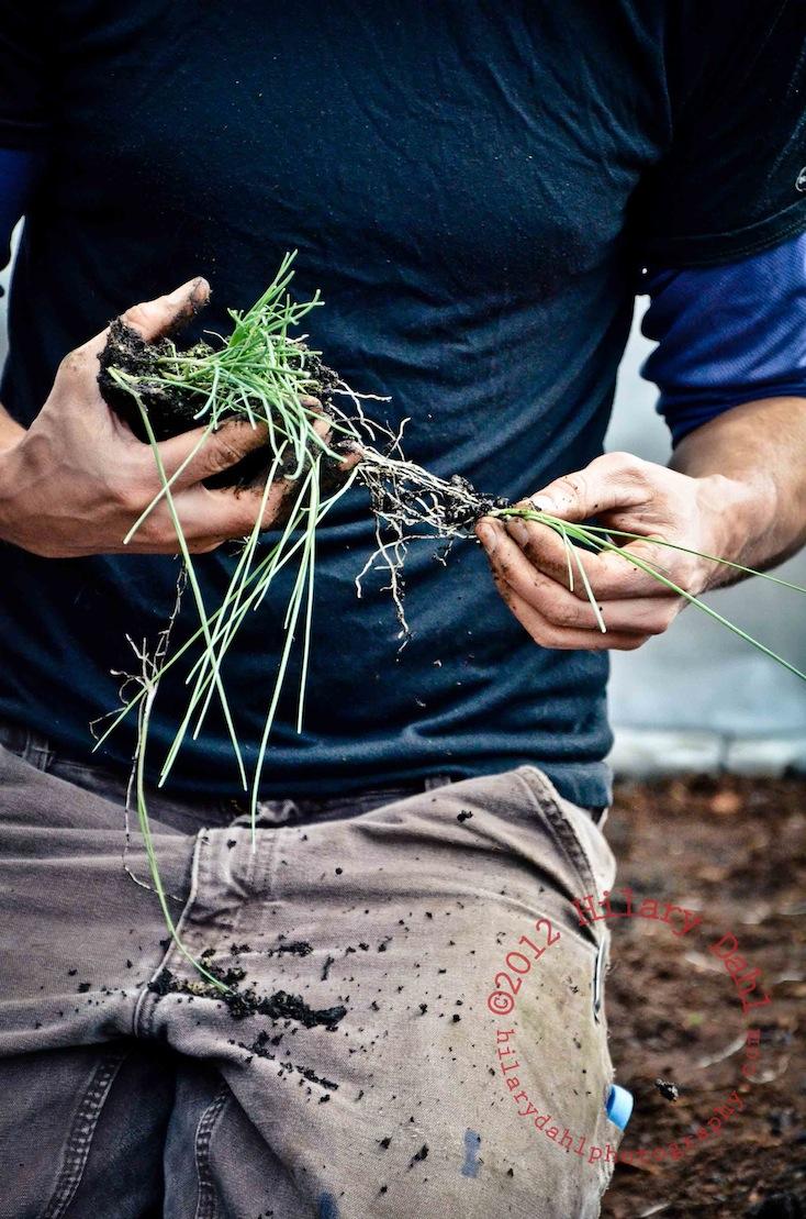 Planting Onions (1).jpg