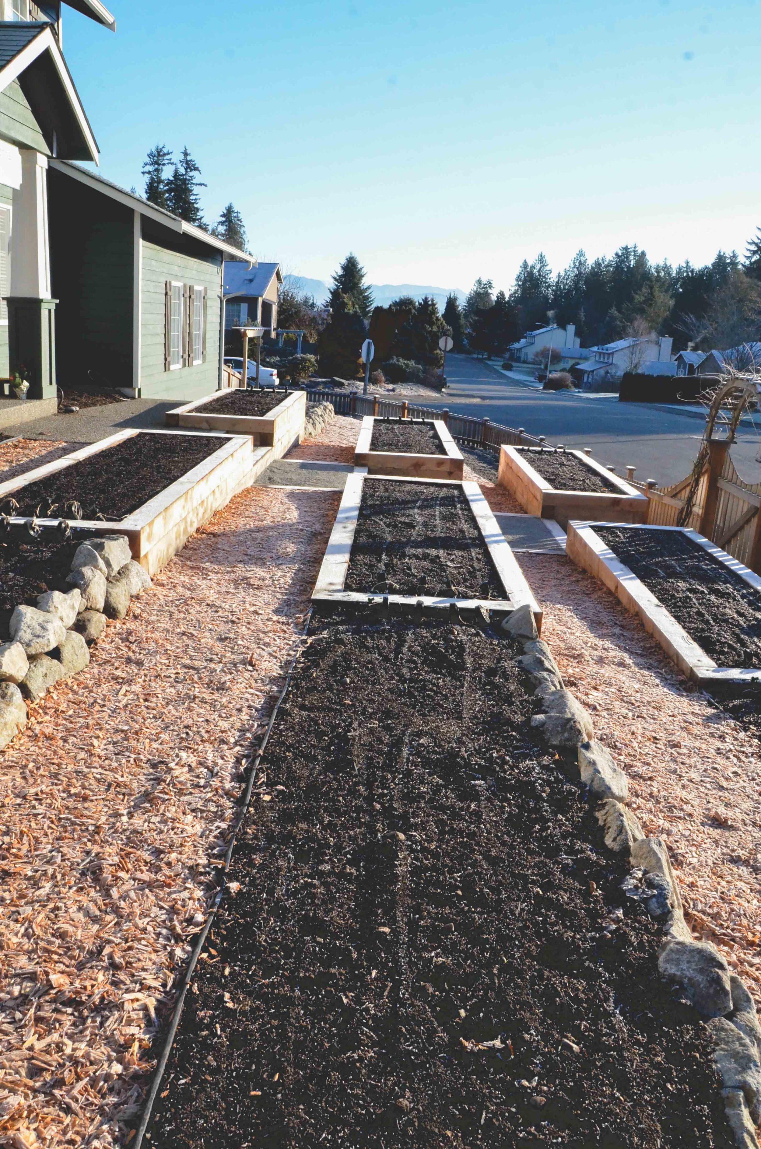 Suburban Front Yard Farm_Seattle Urban Farm Co. Design/Build