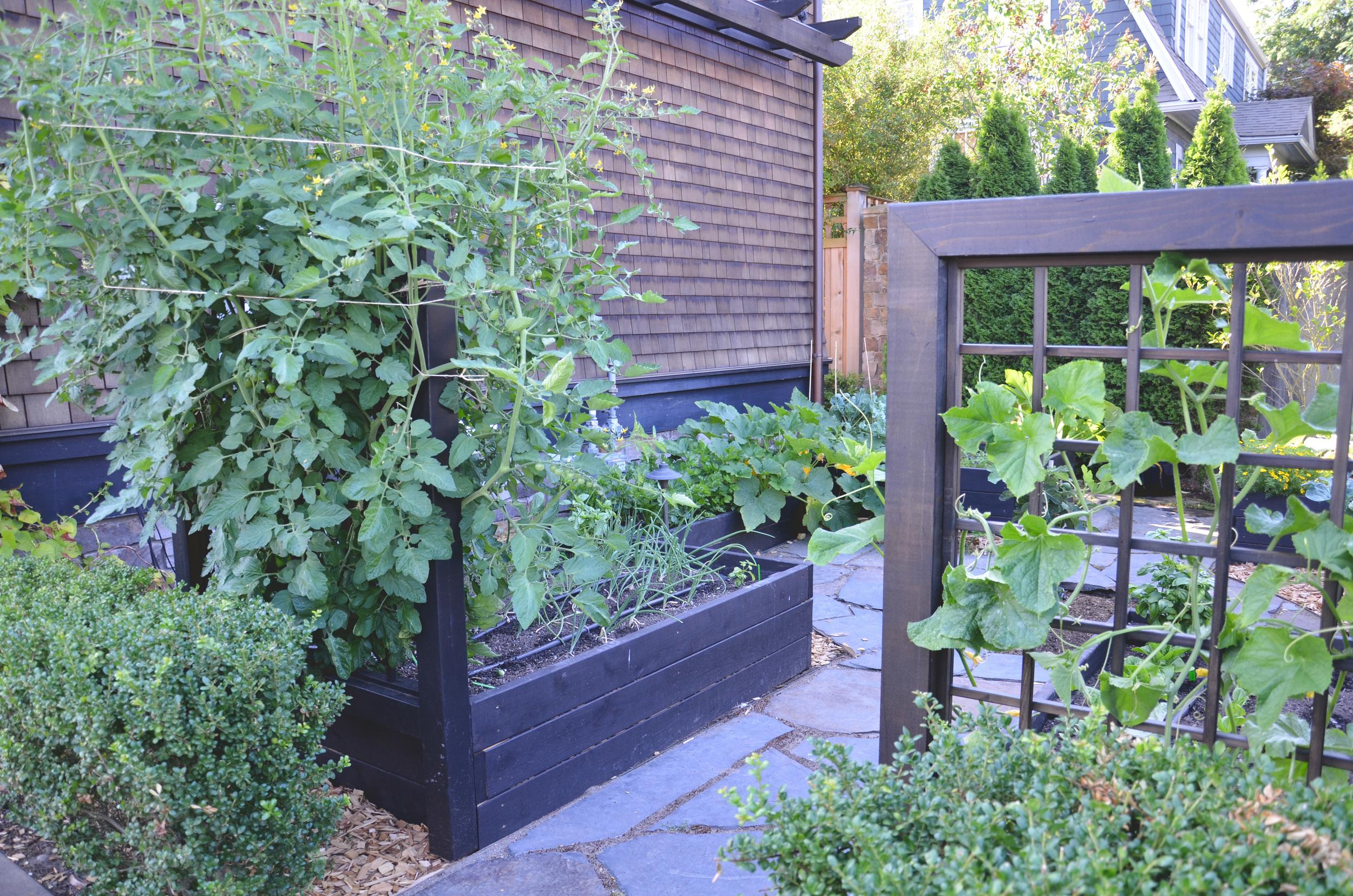 Kitchen Garden Design/Build by Seattle Urban Farm Company