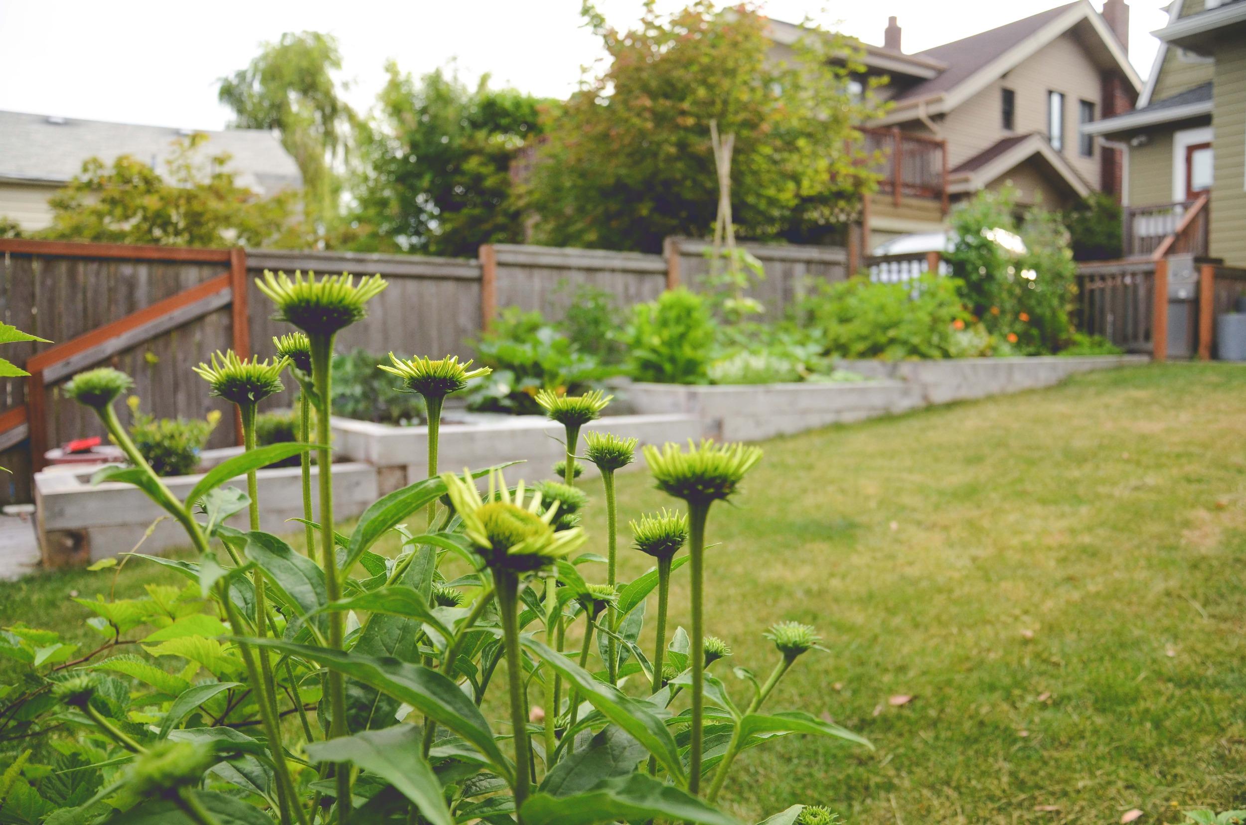 Vegetable Garden Design_Seattle Urban Farm Co