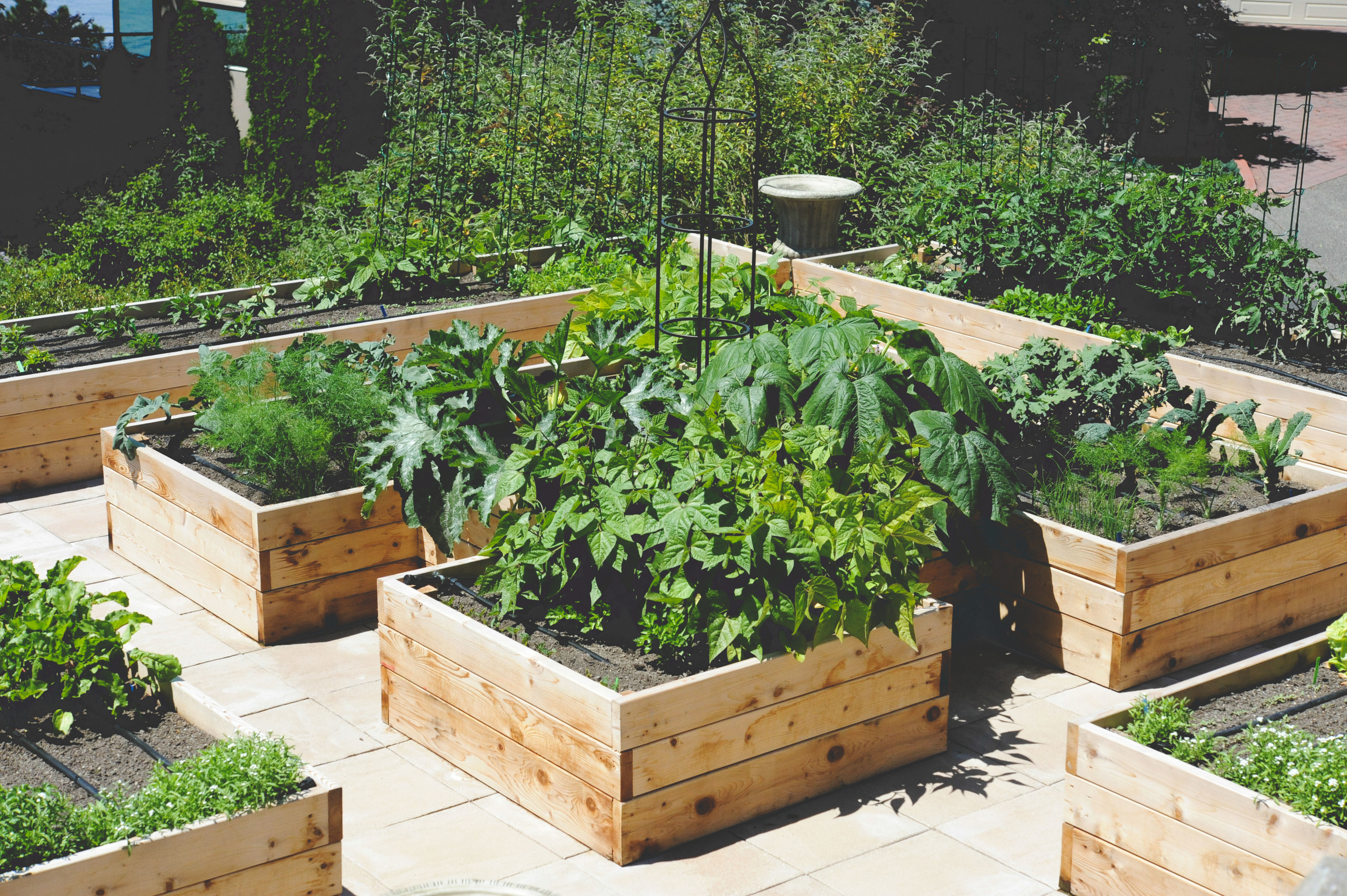 Rooftop_kitchen garden_Seattle Urban Farm Company