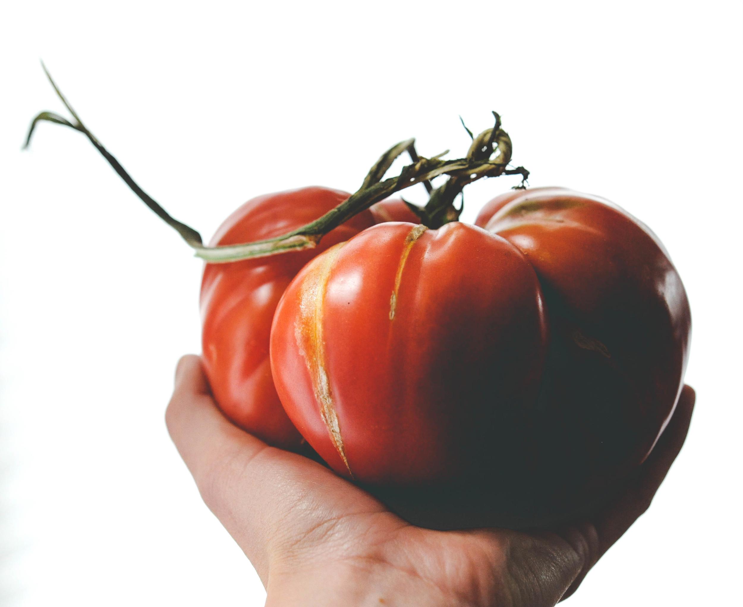 Cherokee Purple Heirloom Tomato                                 Photo by: Hilary Dahl